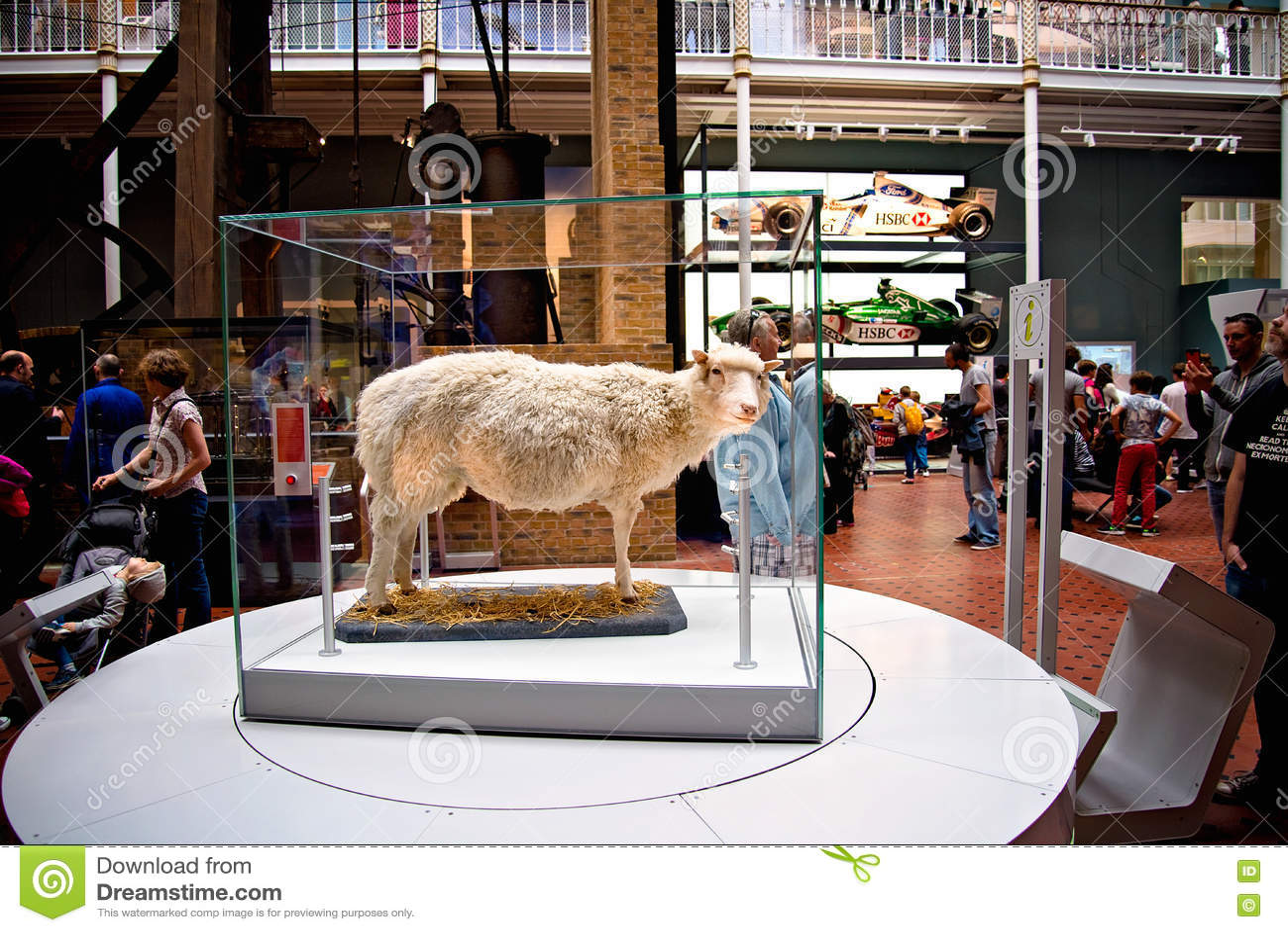 Primer carro reproducido del mamífero las ovejas