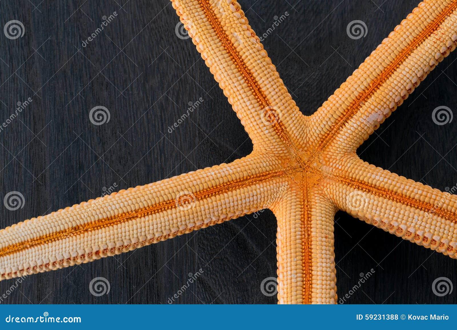 Download Primer de estrellas de mar foto de archivo. Imagen de seashells - 59231388