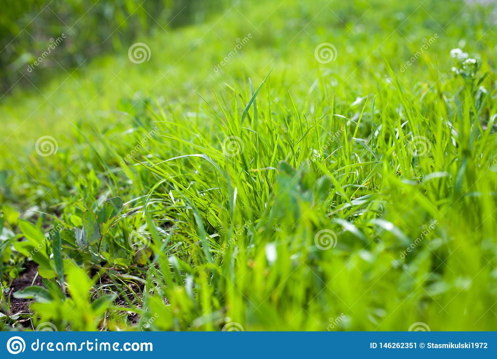 Primer de la hierba verde en verano