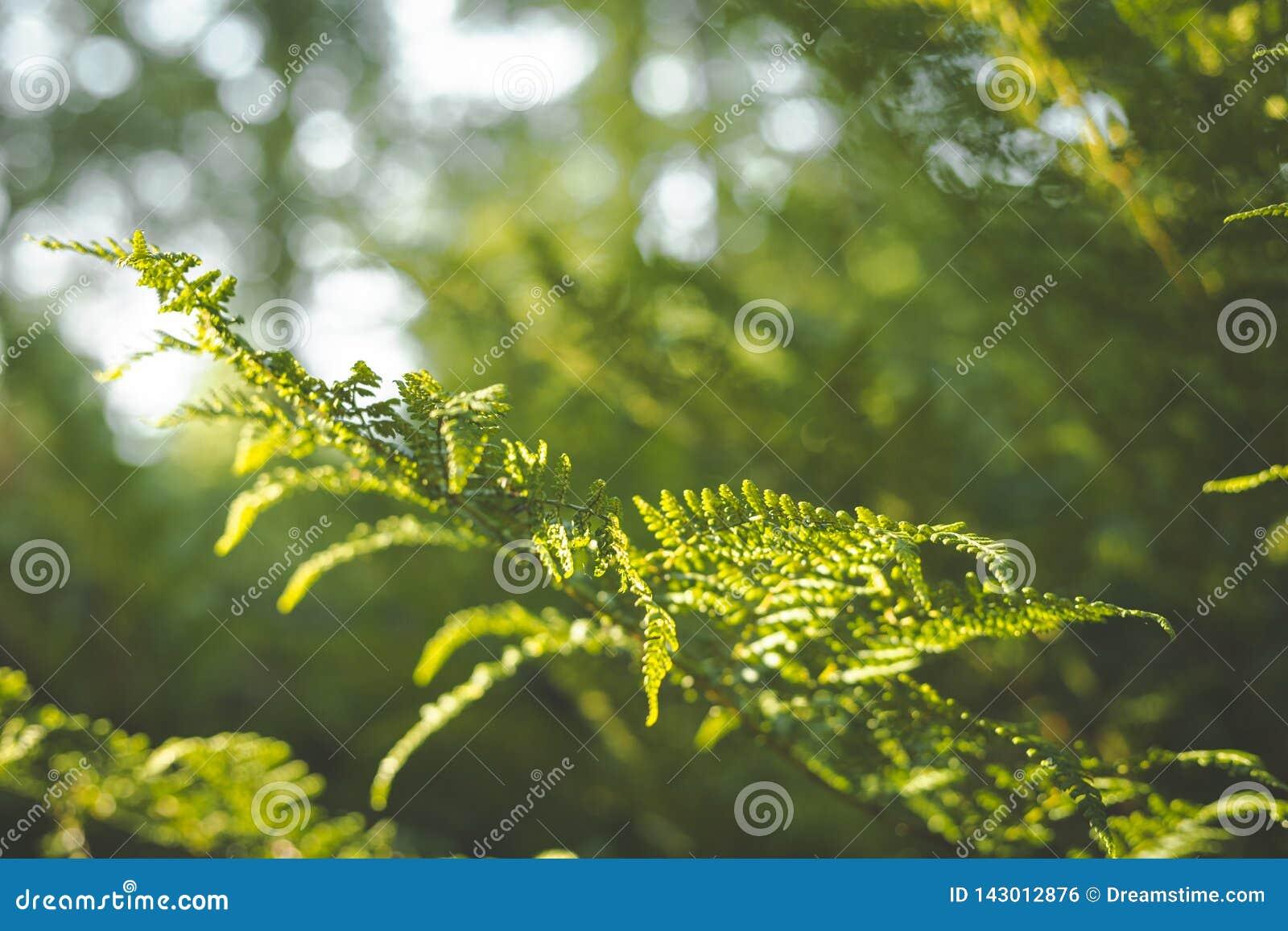 Primer de la hoja del helecho en el sol fondo verde con el cielo azul