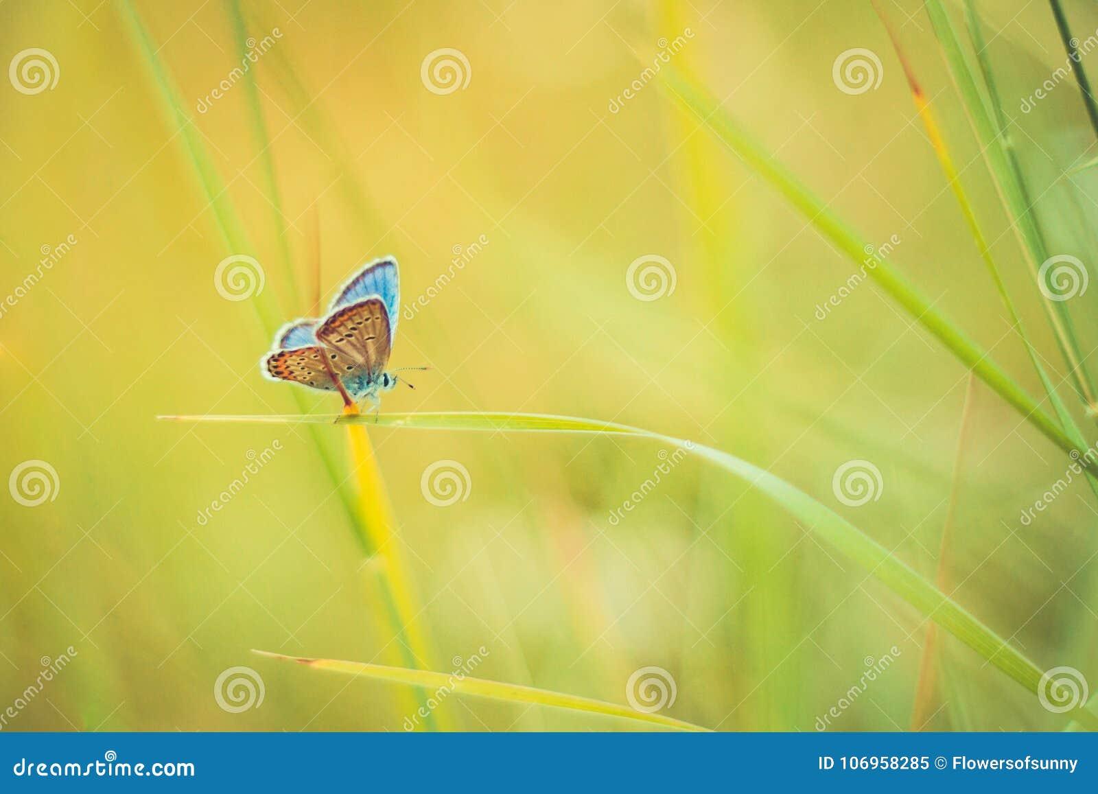 Primer de la naturaleza, flores del verano y mariposa hermosos bajo luz del sol Fondo tranquilo de la naturaleza