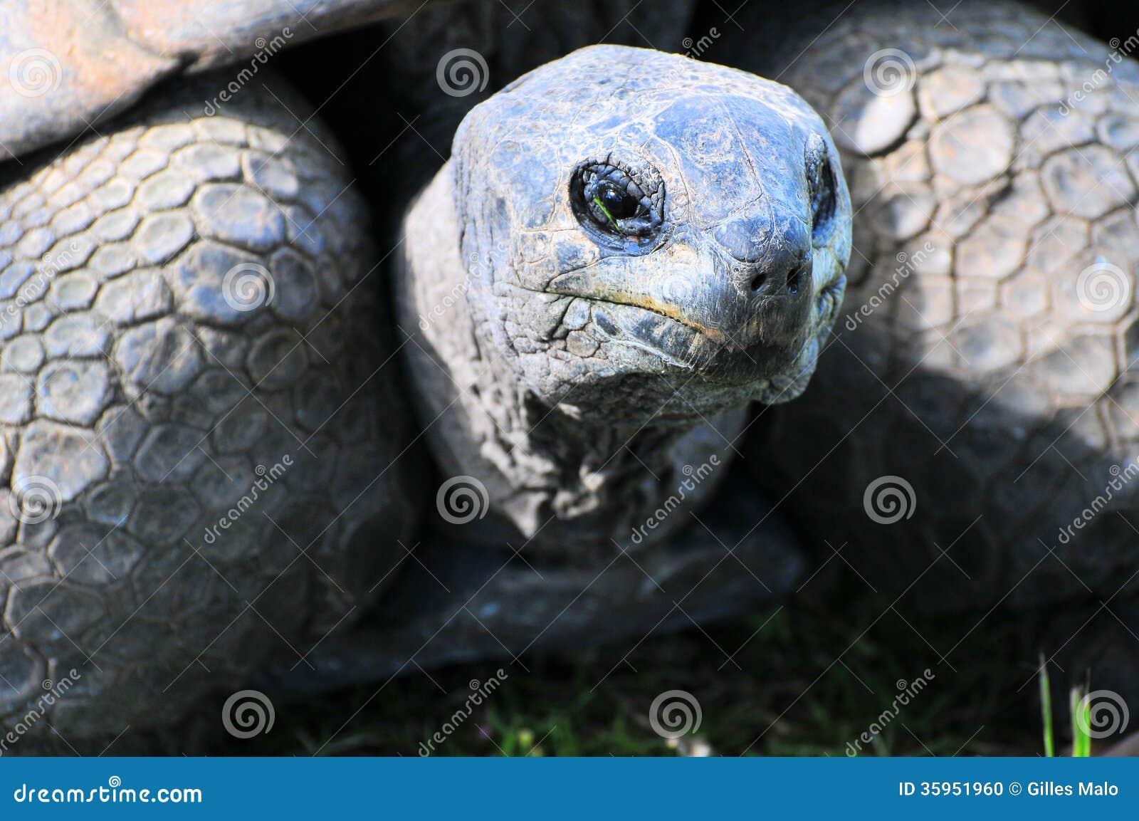 Primer de la tortuga gigante