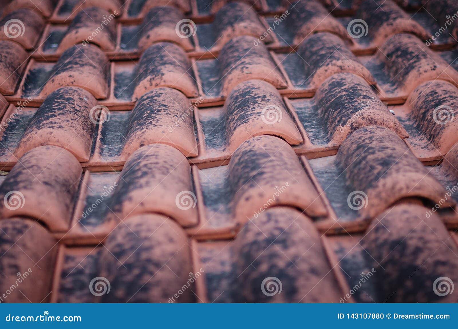 Primer de las tejas de tejado rojas cubiertas con el musgo negro