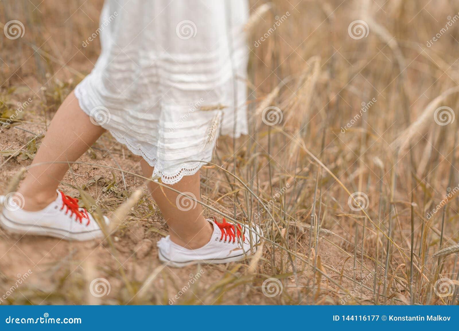 Primer de los pies que caminan en el trigo de oro en el día soleado Disfrutar de la naturaleza Muchacha hermosa en los rayos de l
