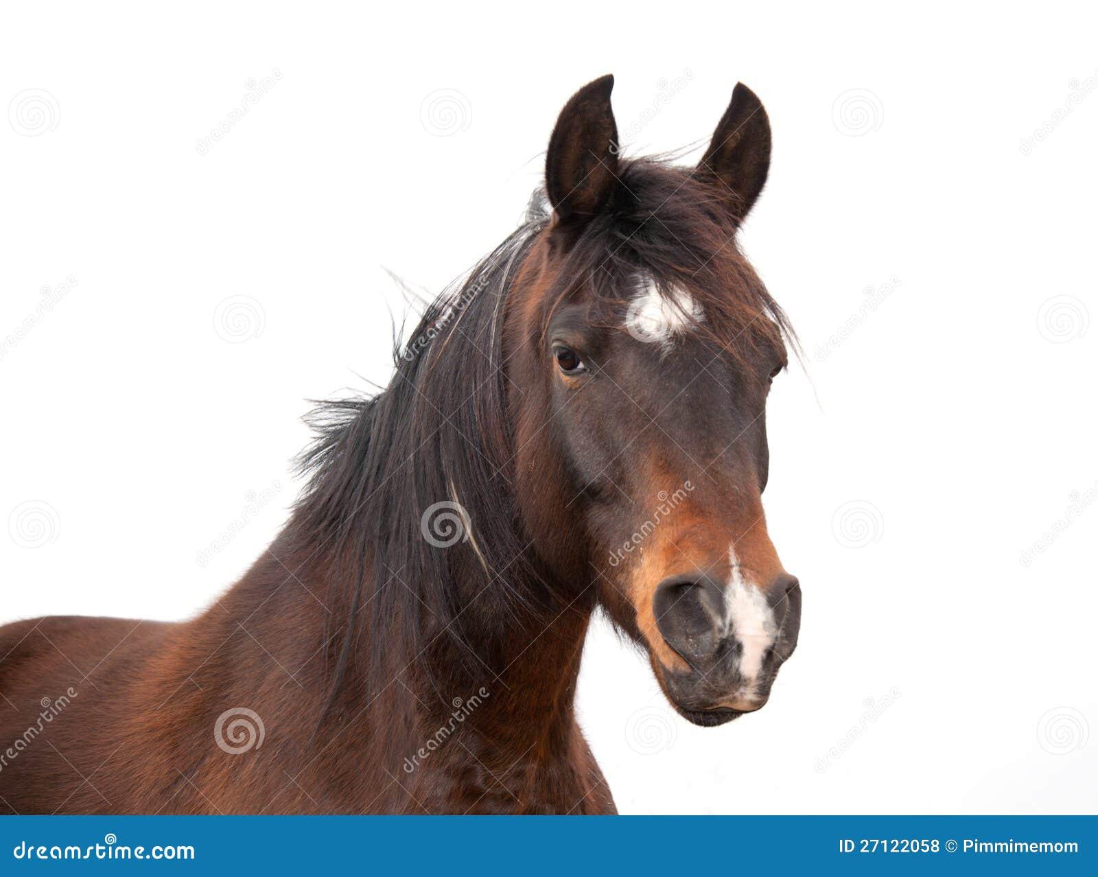 Primer de un caballo árabe hermoso