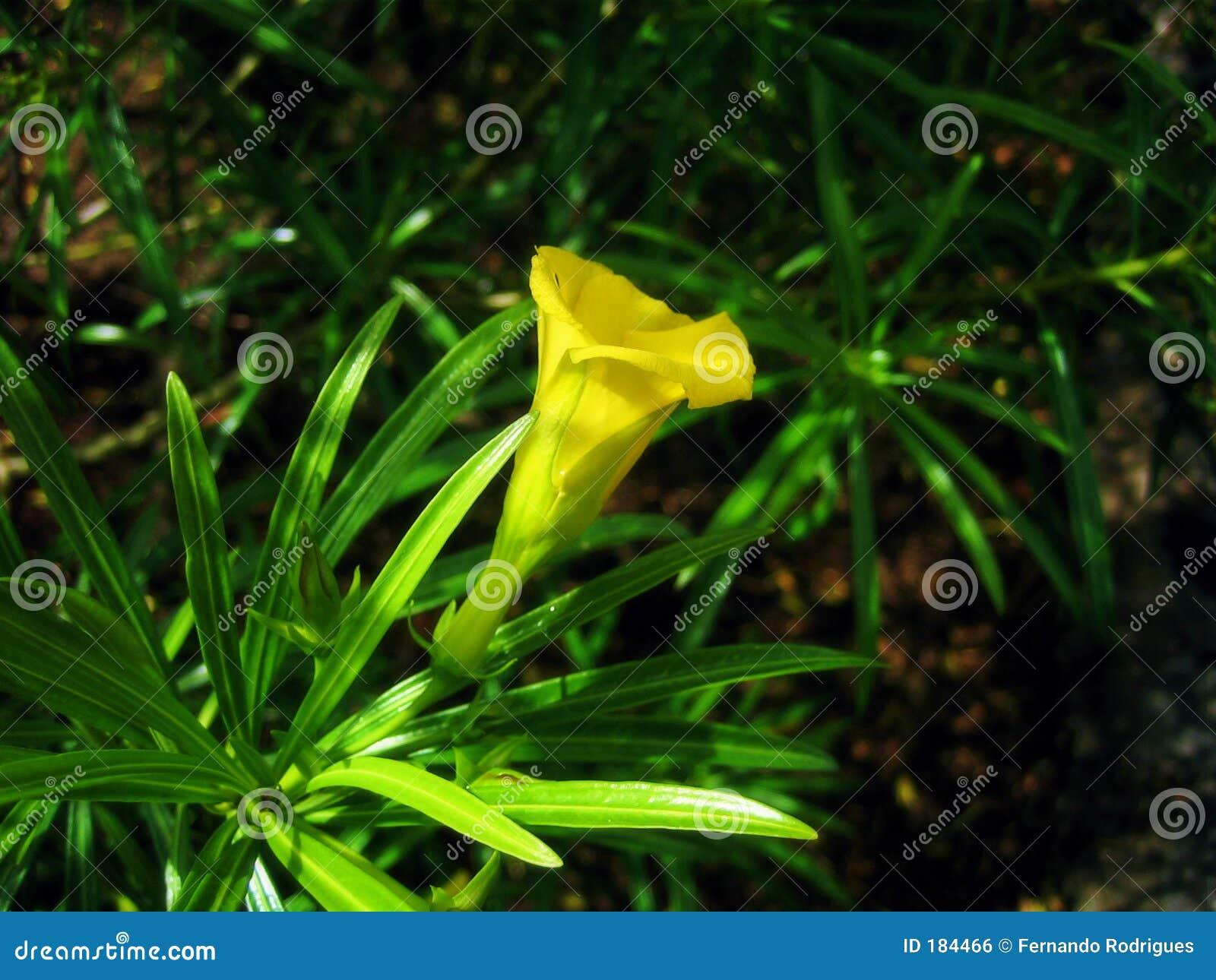 Primer de una flor tropical
