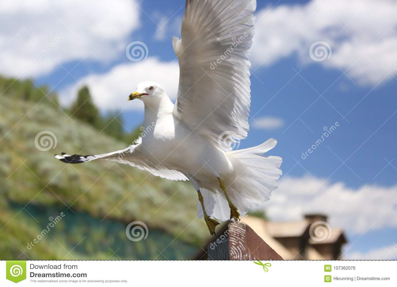 Primer de una gaviota del vuelo sobre un río
