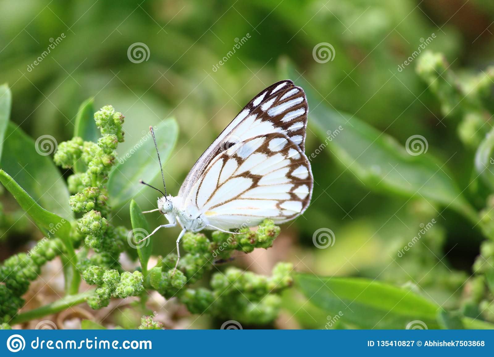 Primer de una mariposa que se sienta en una hoja