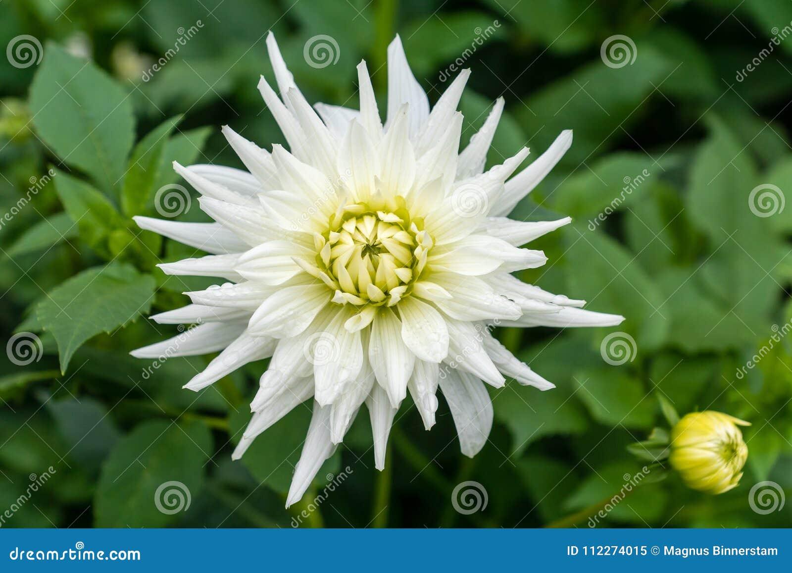 Excepcional Flor De Lis De Uñas Bosquejo - Ideas de Pintar de Uñas ...