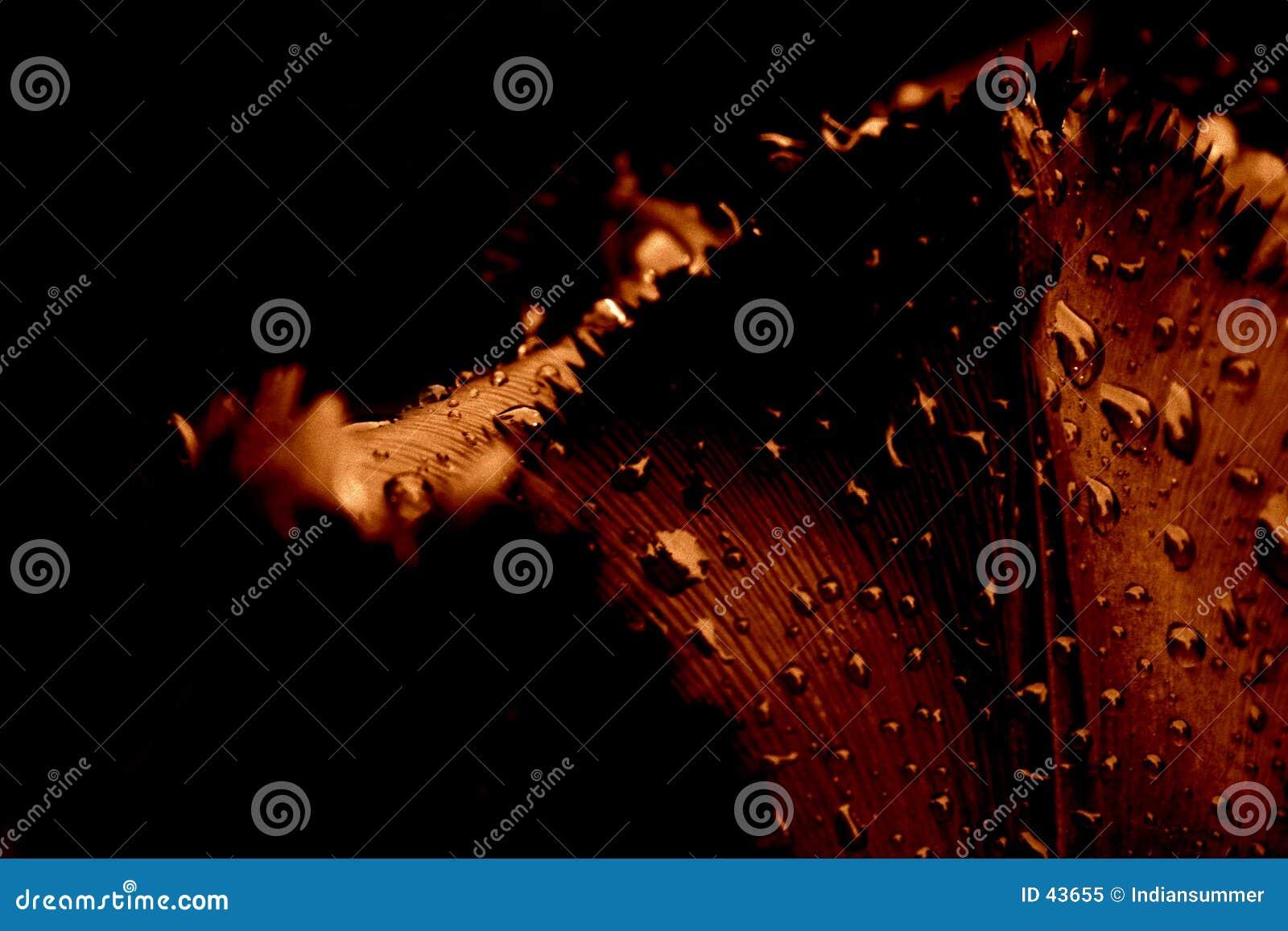 Download Primer Del Tulipán, En La Lluvia Imagen de archivo - Imagen de regalo, oscuro: 43655