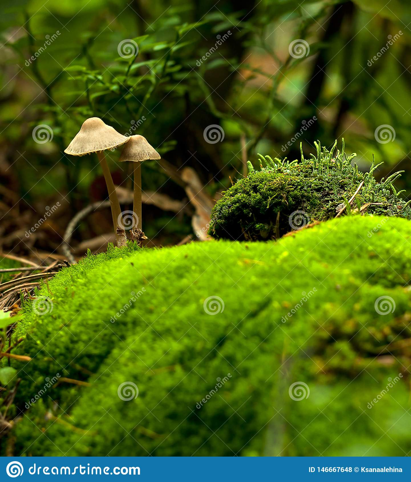 Primer hermoso de las setas del bosque