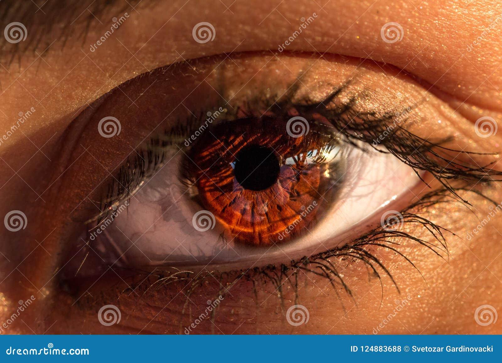 Primer hermoso del ojo de la mujer