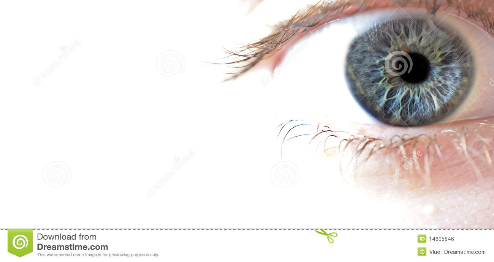 Primer macro del ojo azul