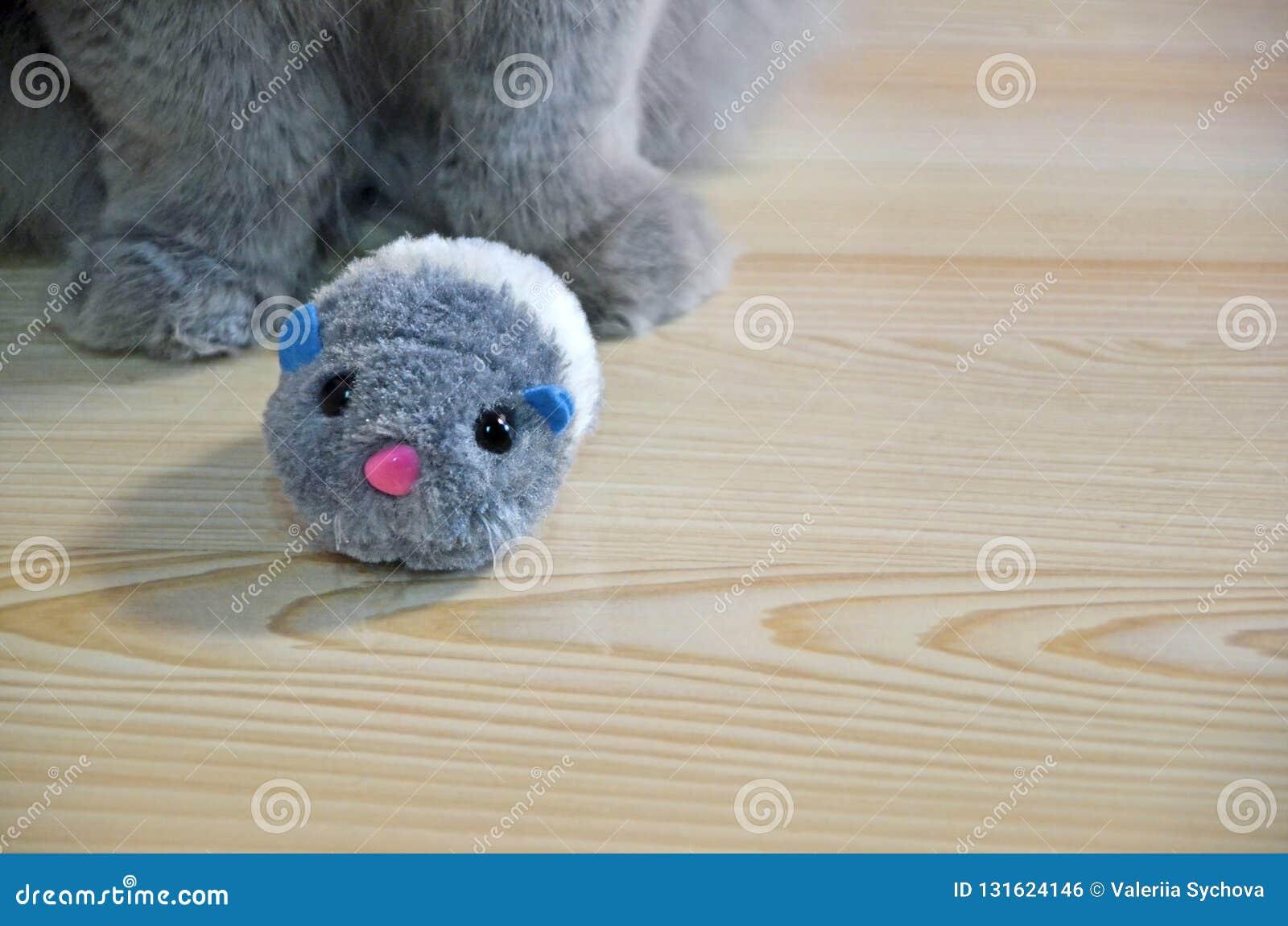 Primer mullido felino de las patas en un piso de madera un gato de pelo largo gris y poco ratón mullido del juguete