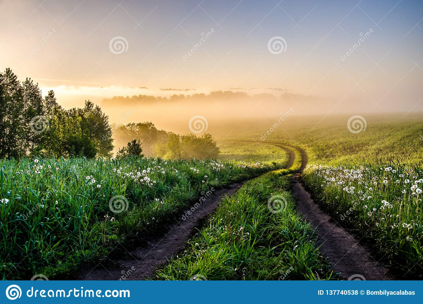 Primo mattino foresta che si nasconde nella nebbia legno conifero dell Ucraina del percorso di foresta dell Europa orientale
