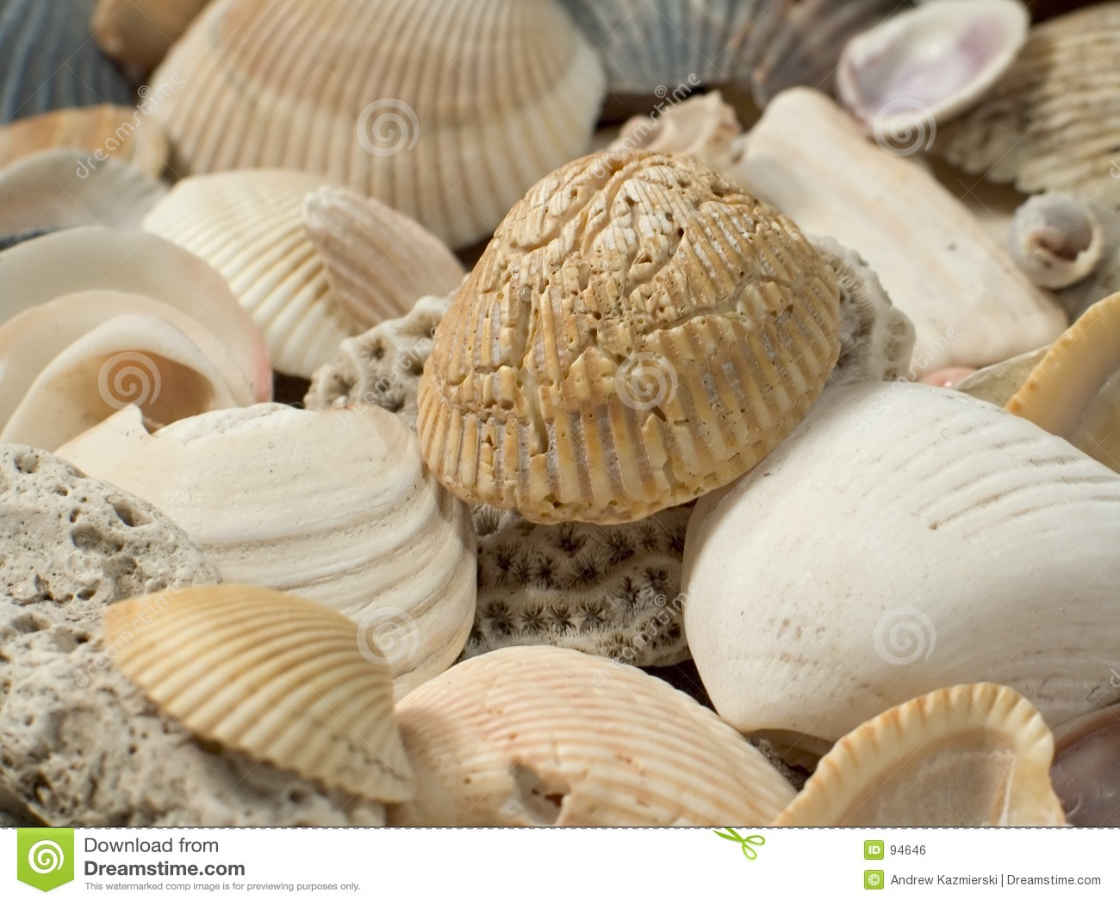 Primo piano dei SeaShells