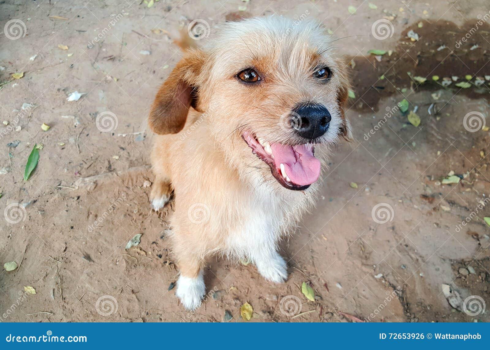 Primo piano del fronte del cane fotografia stock for Piani principali del primo piano