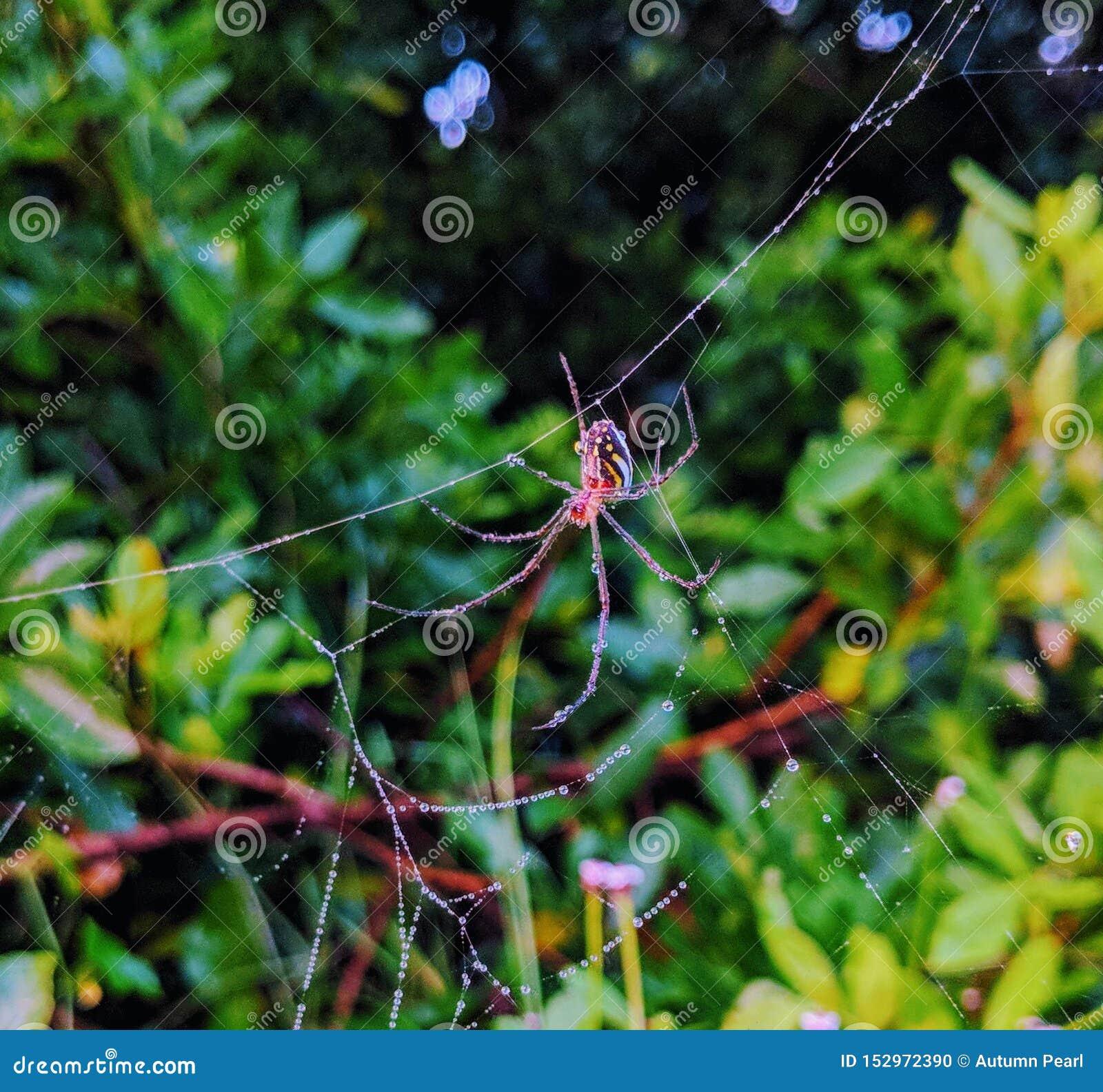 Primo piano del ragno rosso sul web