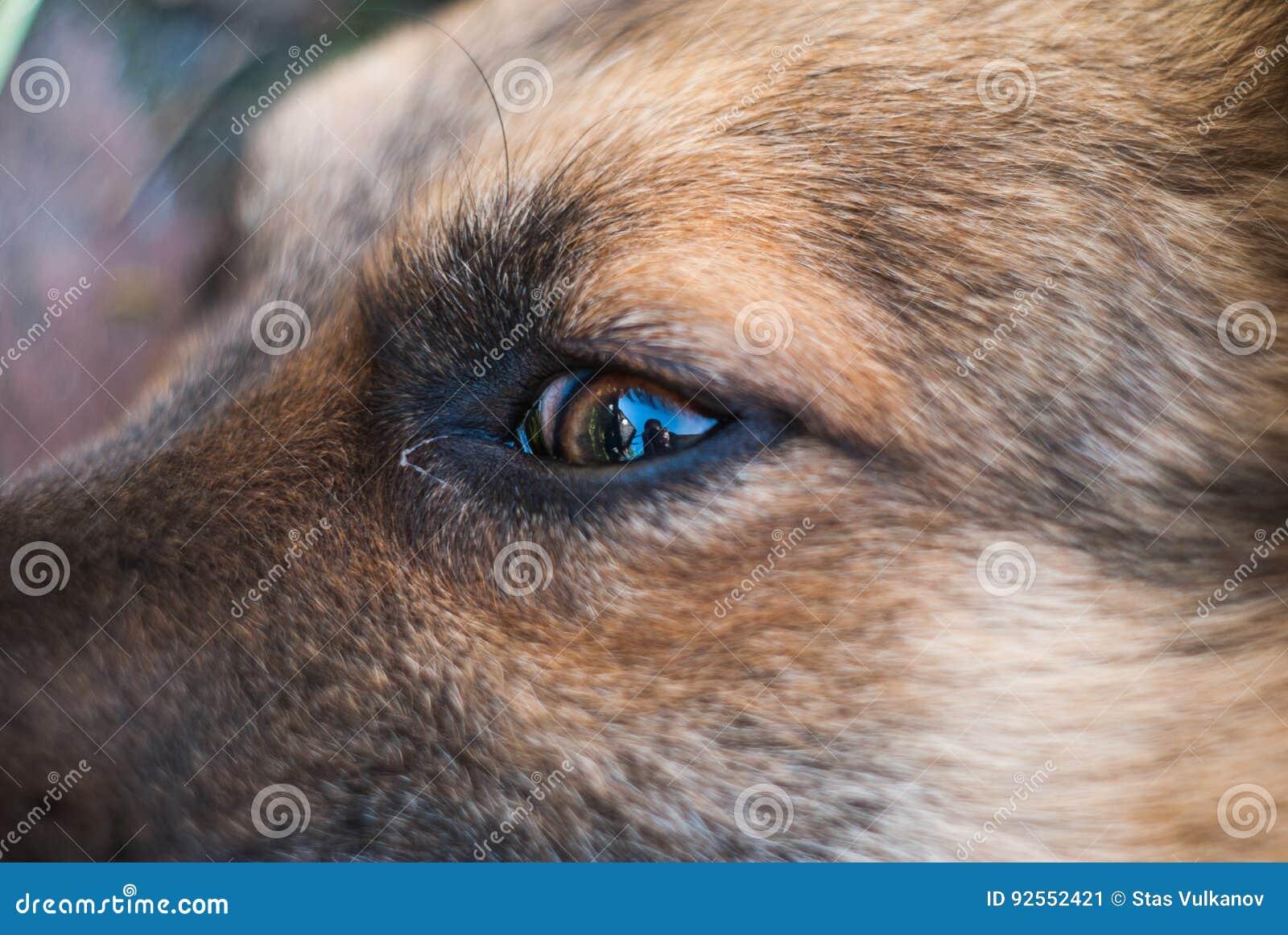 Primo piano dell occhio del cane,