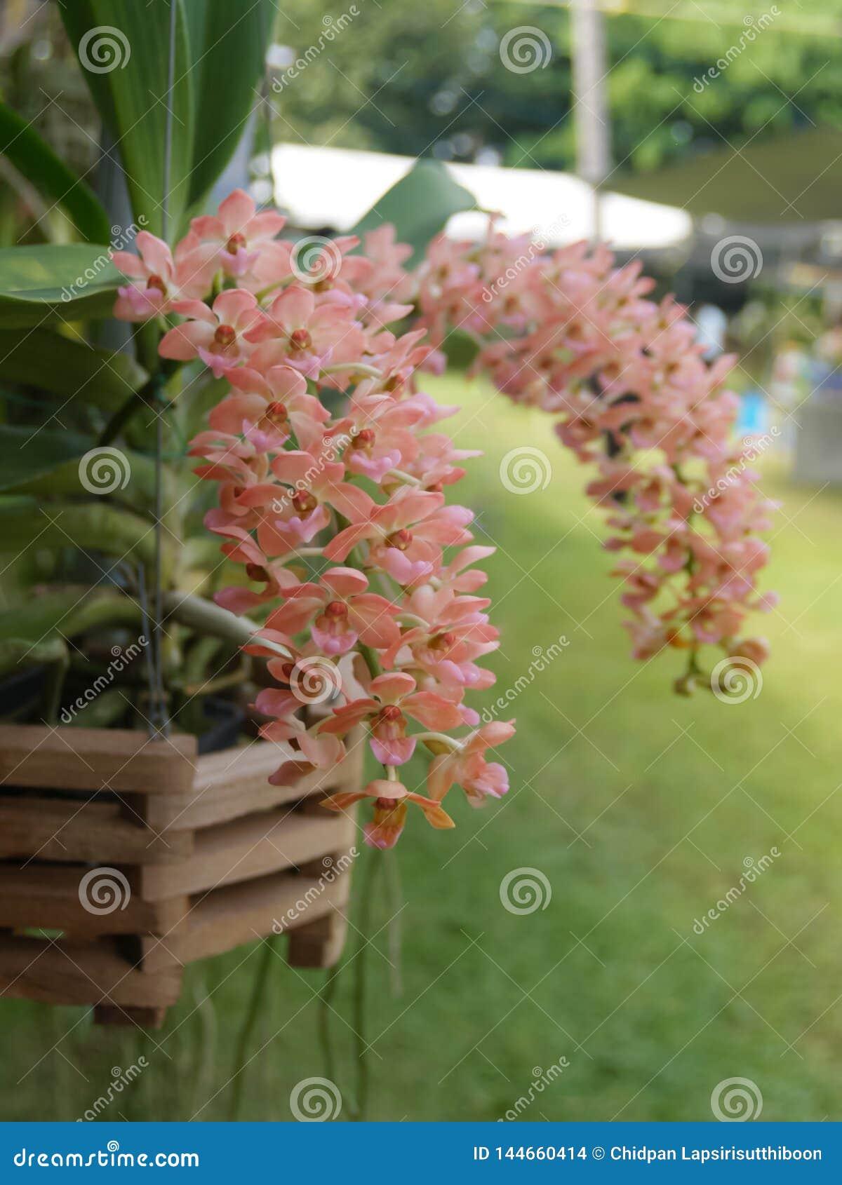Primo piano dell orchidea arancio su uno sfondo naturale variopinto