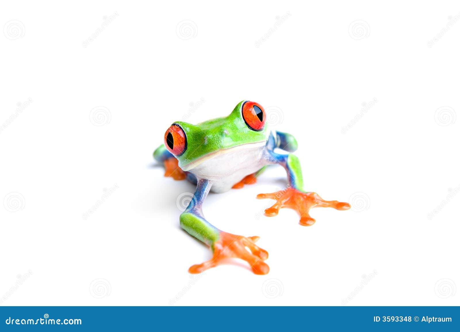 Primo piano della rana isolato su bianco