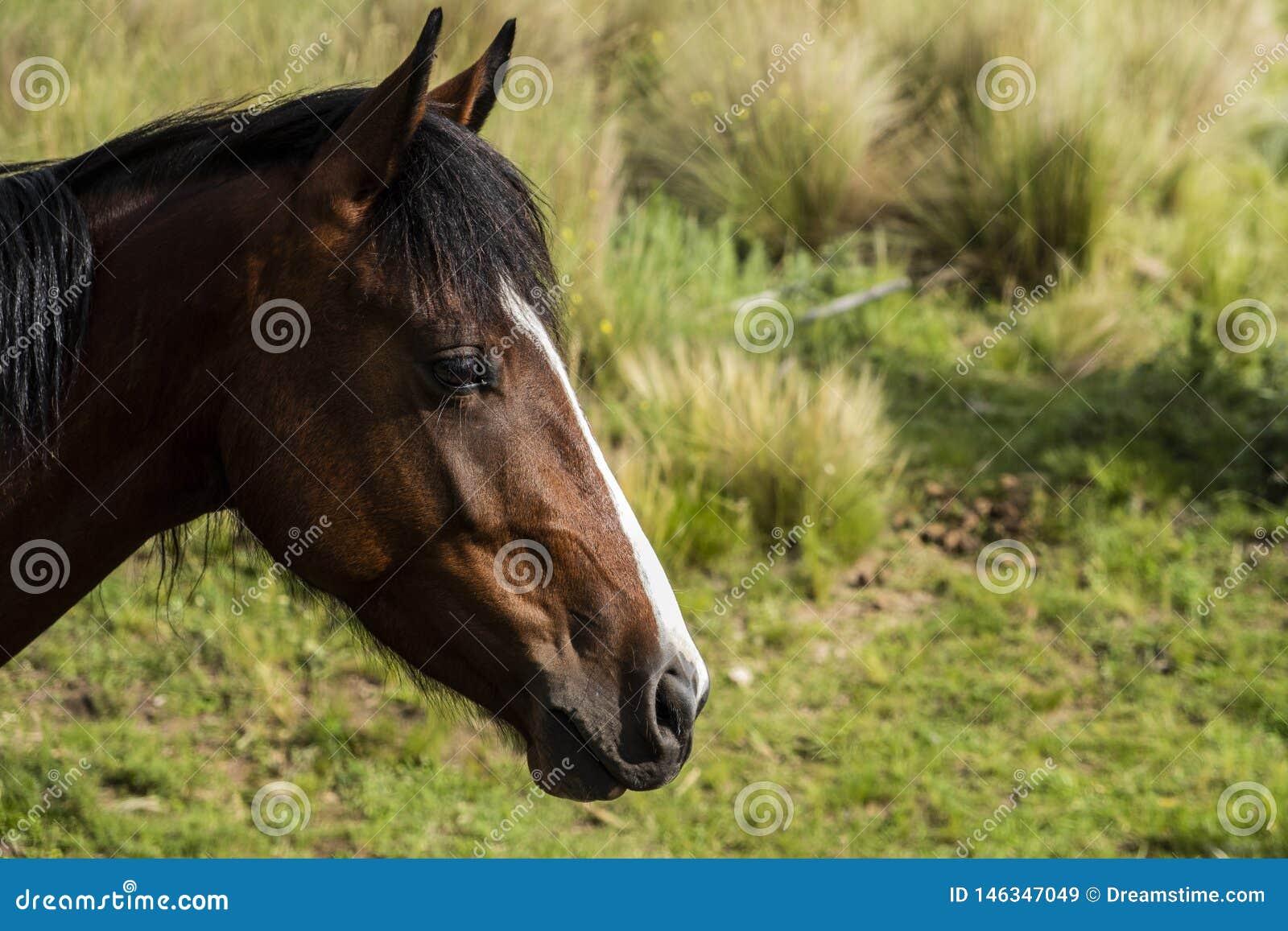 Primo piano della testa di un cavallo marrone