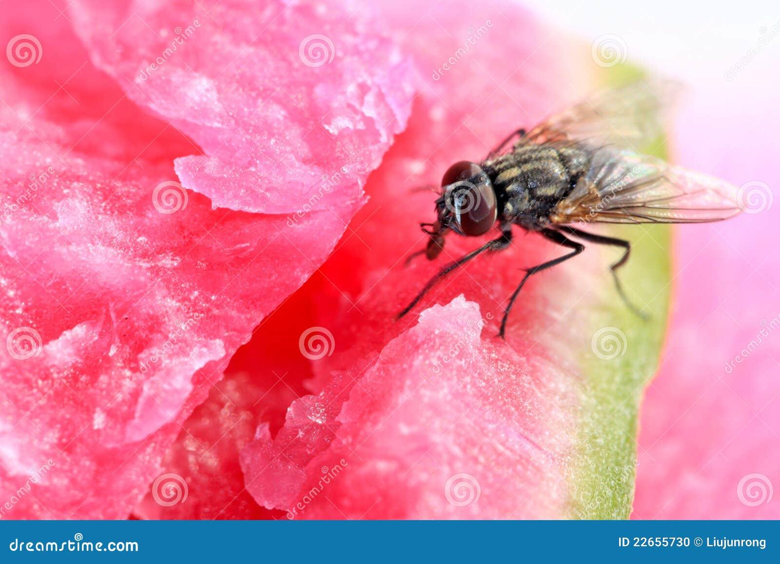 Primo piano delle mosche