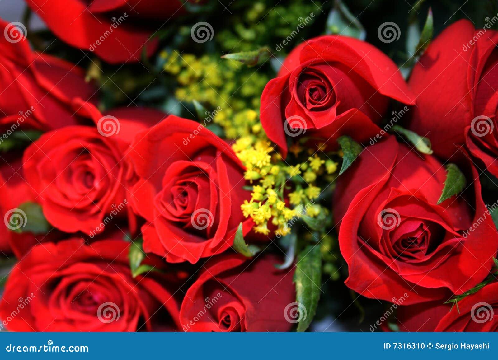 Primo piano delle rose di bellezza