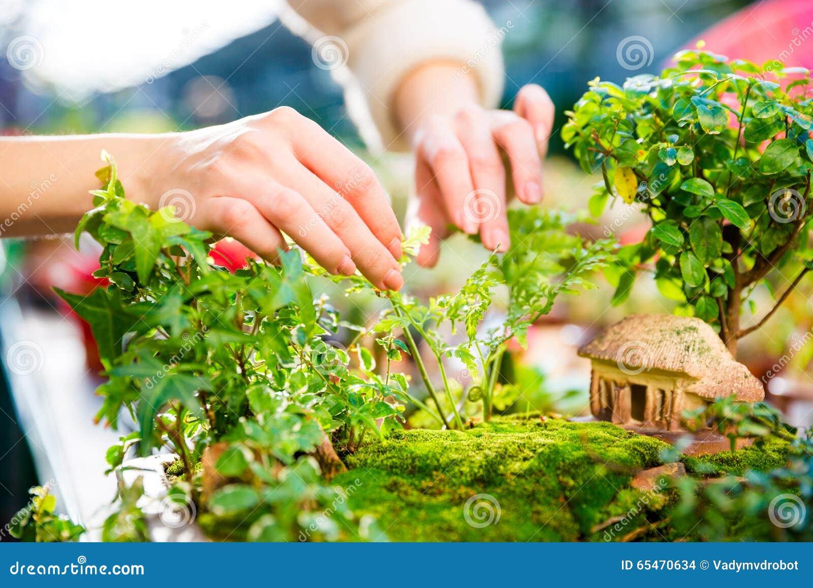Piccoli alberi giardino for Piccoli piani casa efficienti