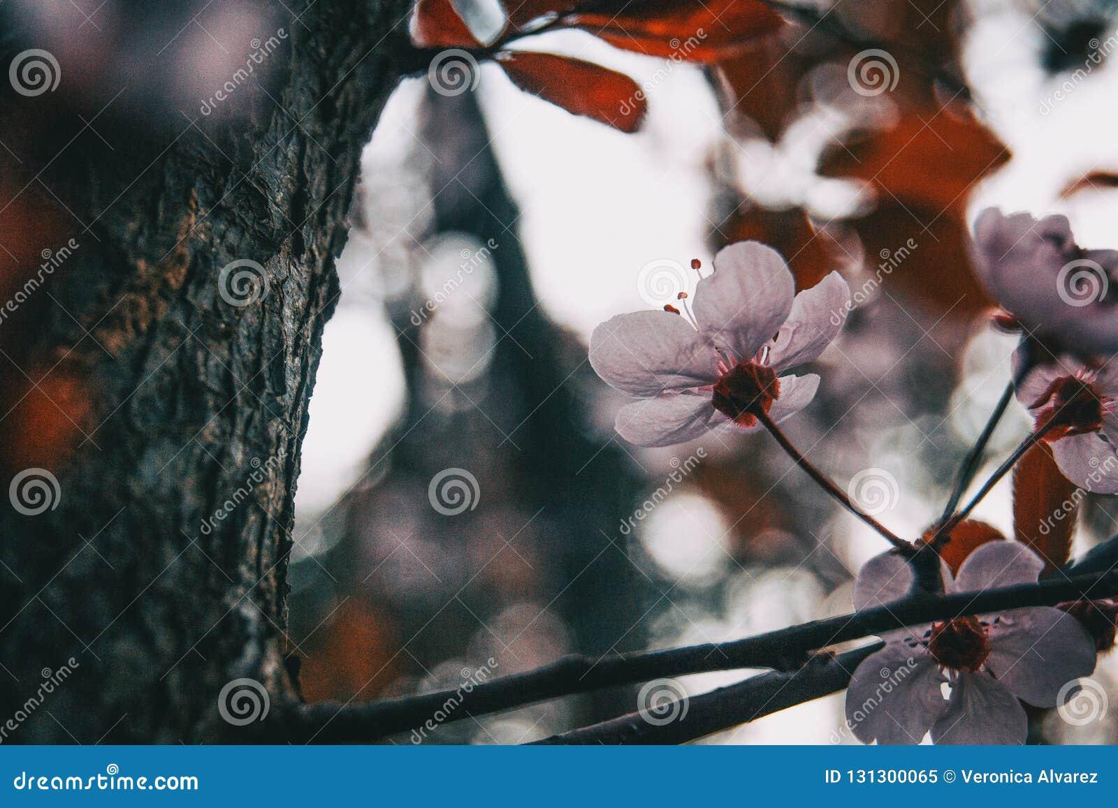 Primo piano di piccoli fiori rosa-chiaro