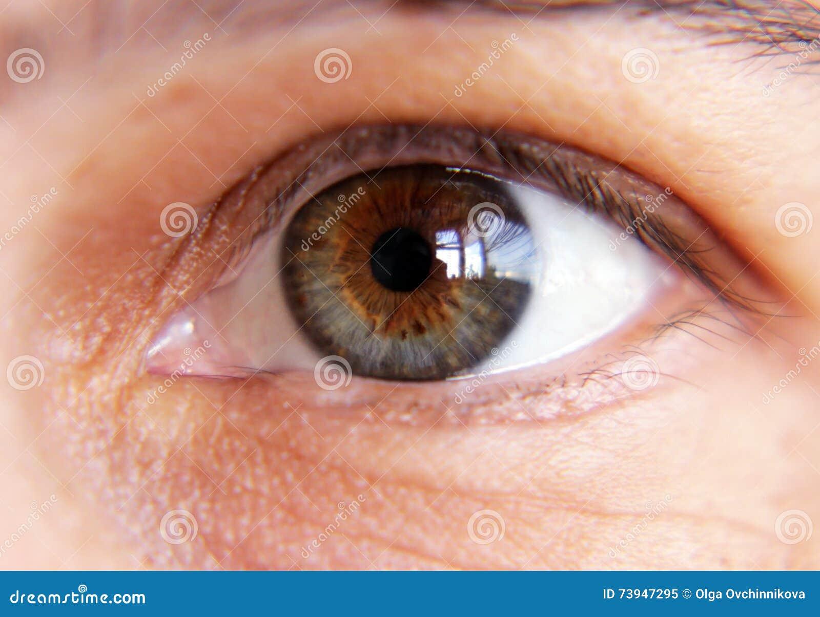 Primo piano femminile dell occhio di Brown
