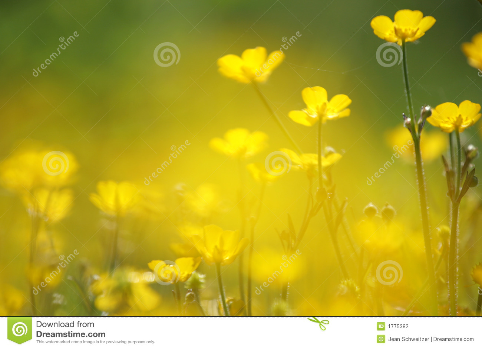 Primo piano giallo del fiore