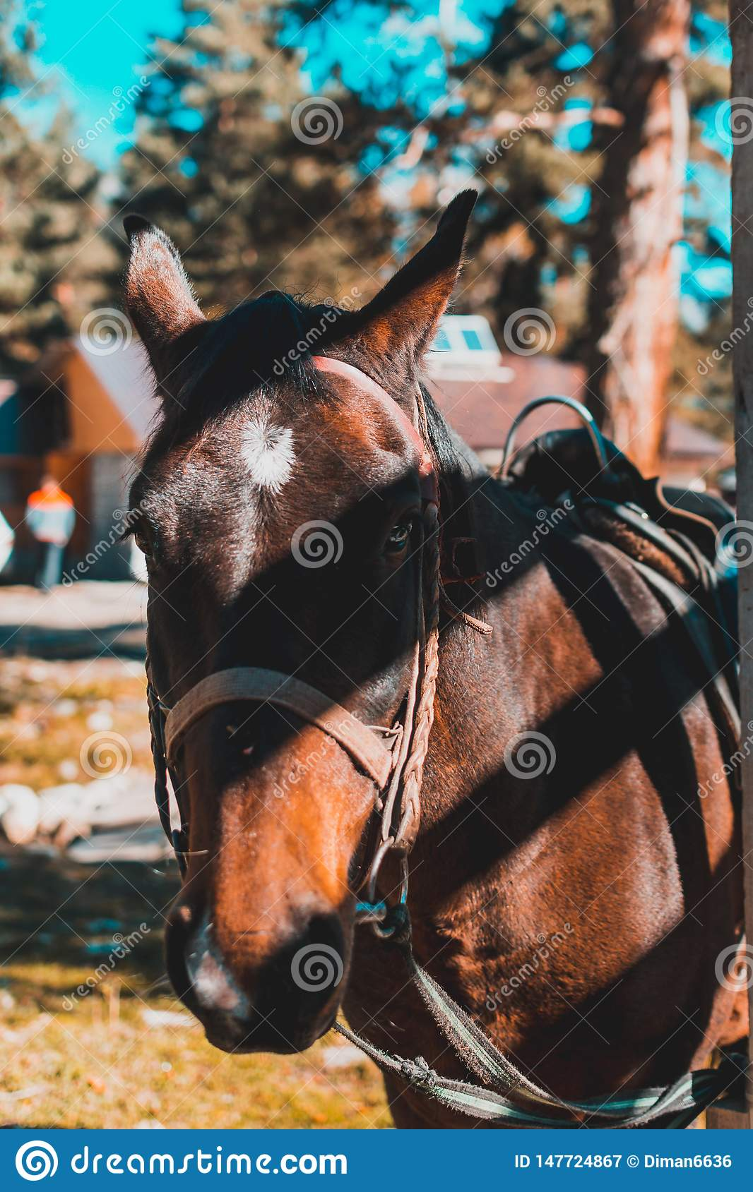 Primo piano sparato capo di un cavallo sul pascolo di estate Primo piano di giovane cavallo su sfondo naturale all aperto