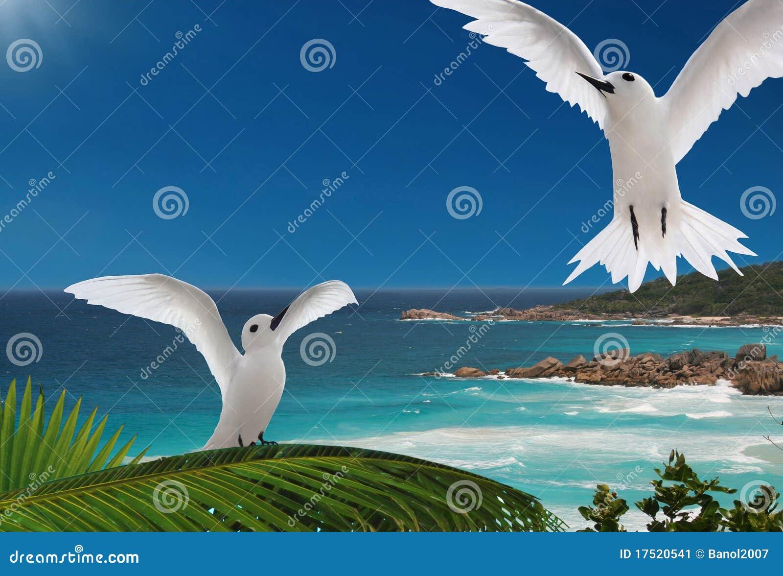 Primo Volo Uccelli Isole Delle Seychelles Immagine