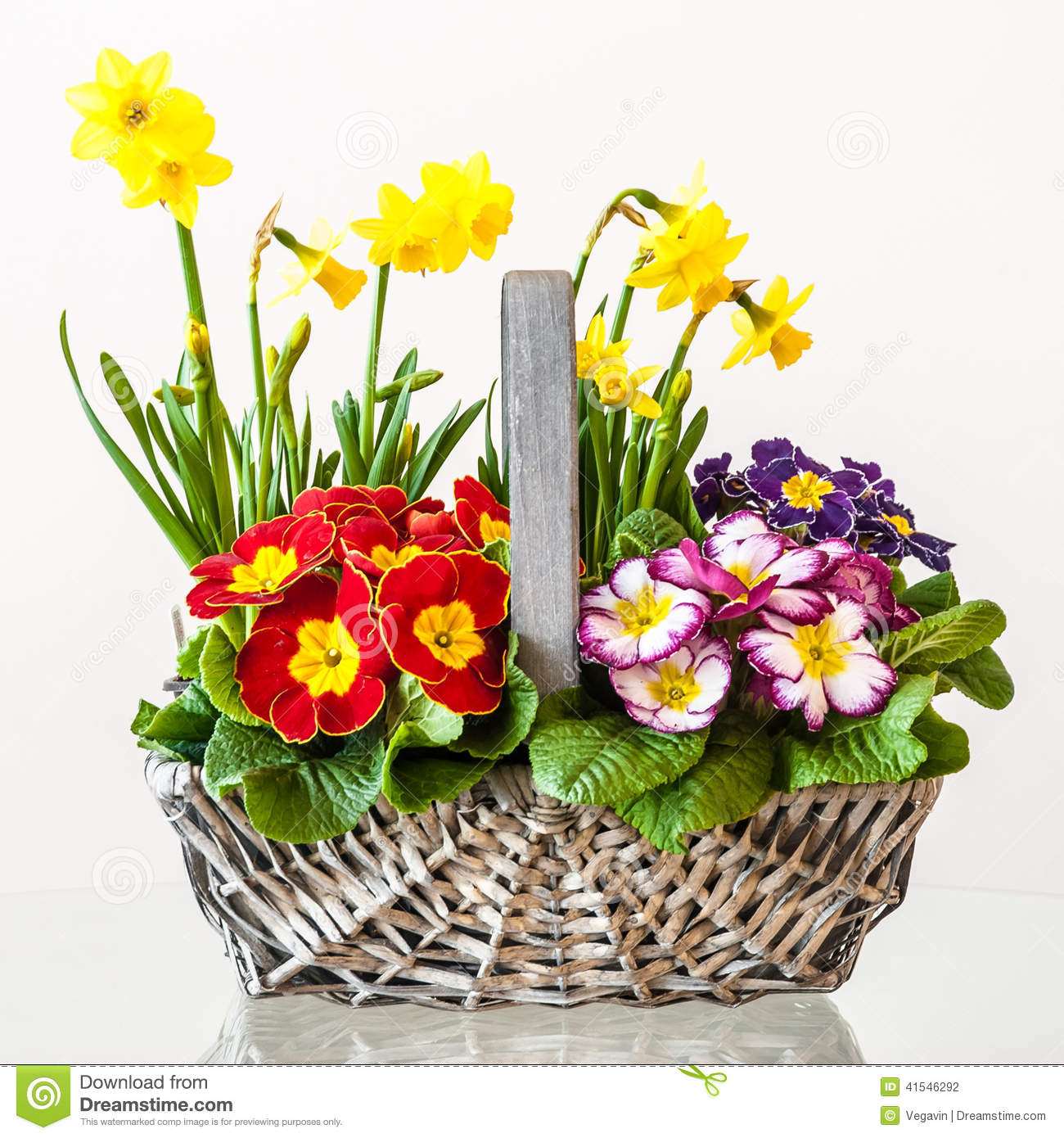 Primulas Basket Of Spring Flowers Stock Photo Image Of Mother