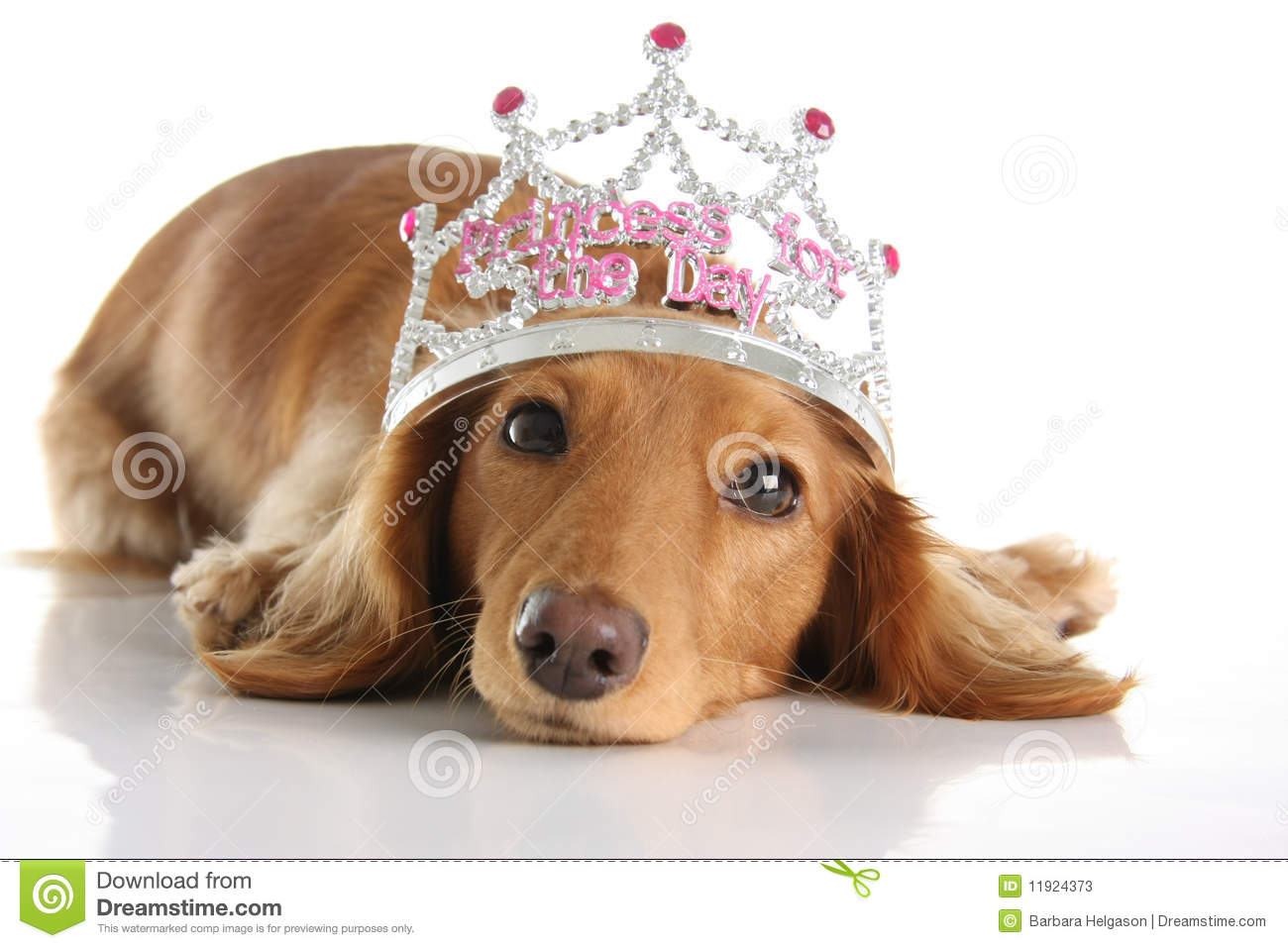 Princesa do Dachshund
