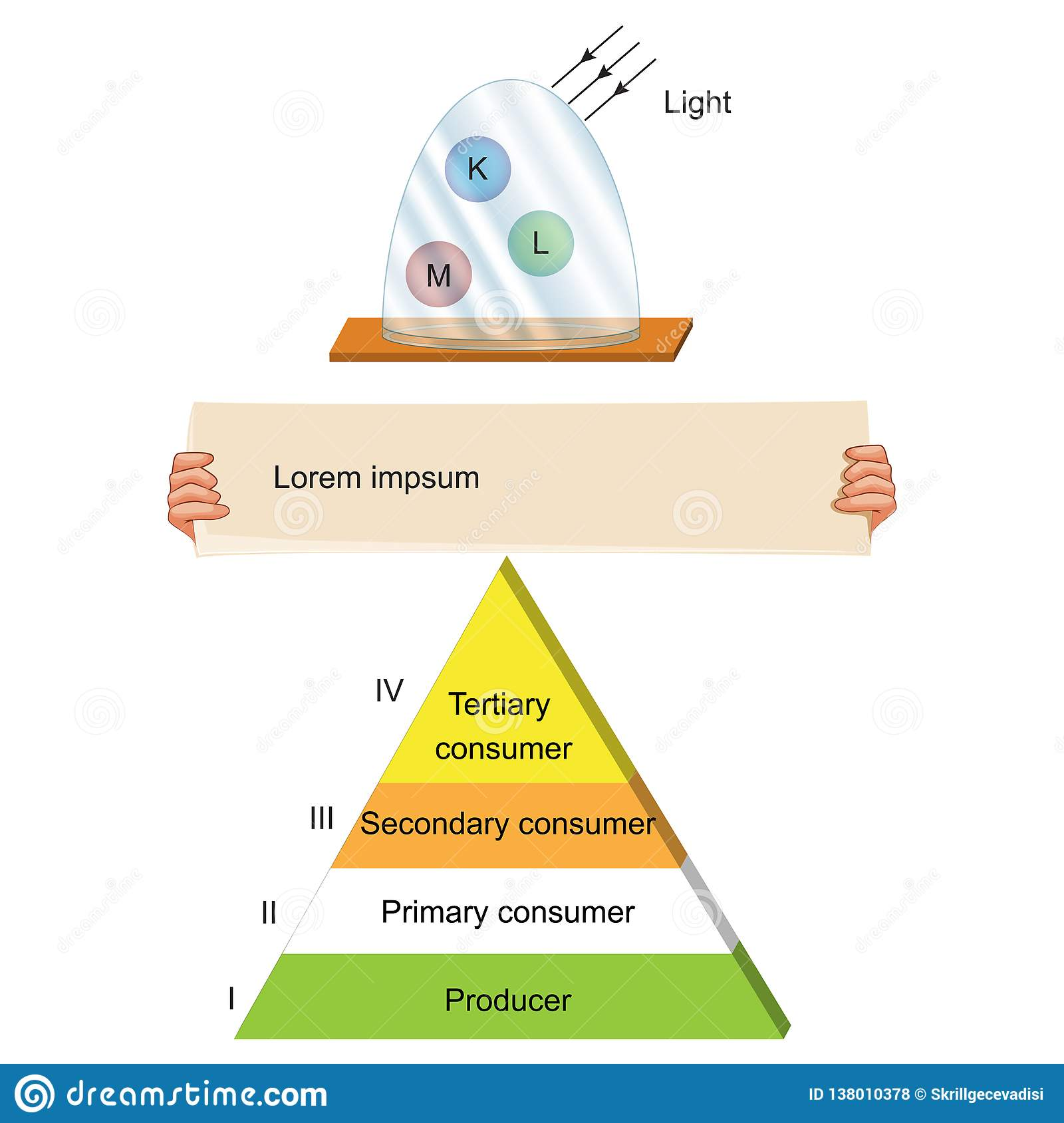 Biology - food chain pyramid