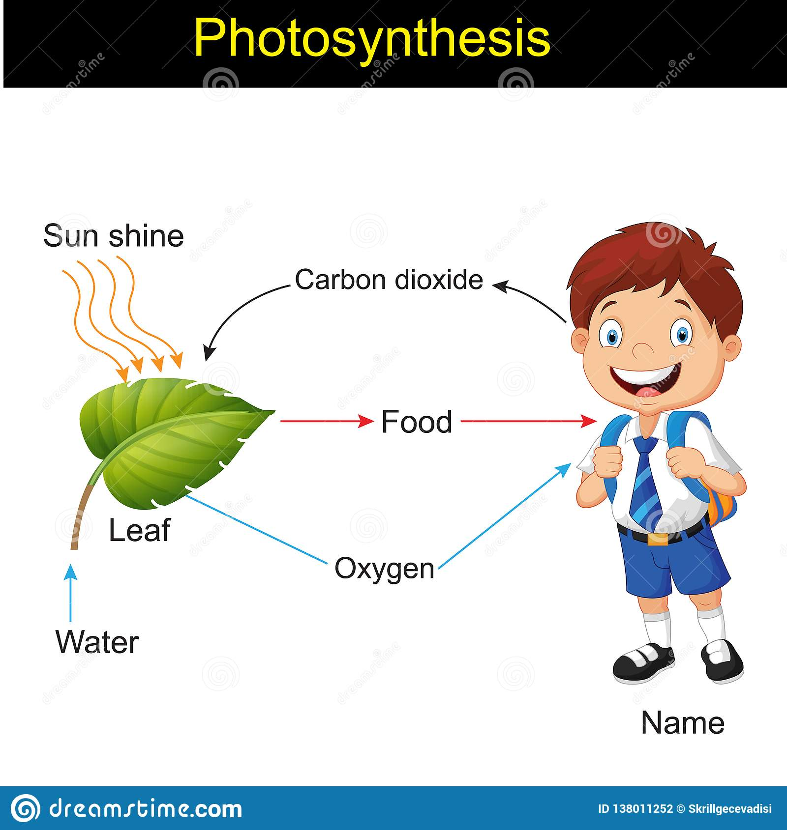 Biology Photosynthesis Modeling Version 01 Stock Vector Illustration Of Diagram Biology 138011252 Photosynthesis diagram name checklist included? https www dreamstime com print image138011252