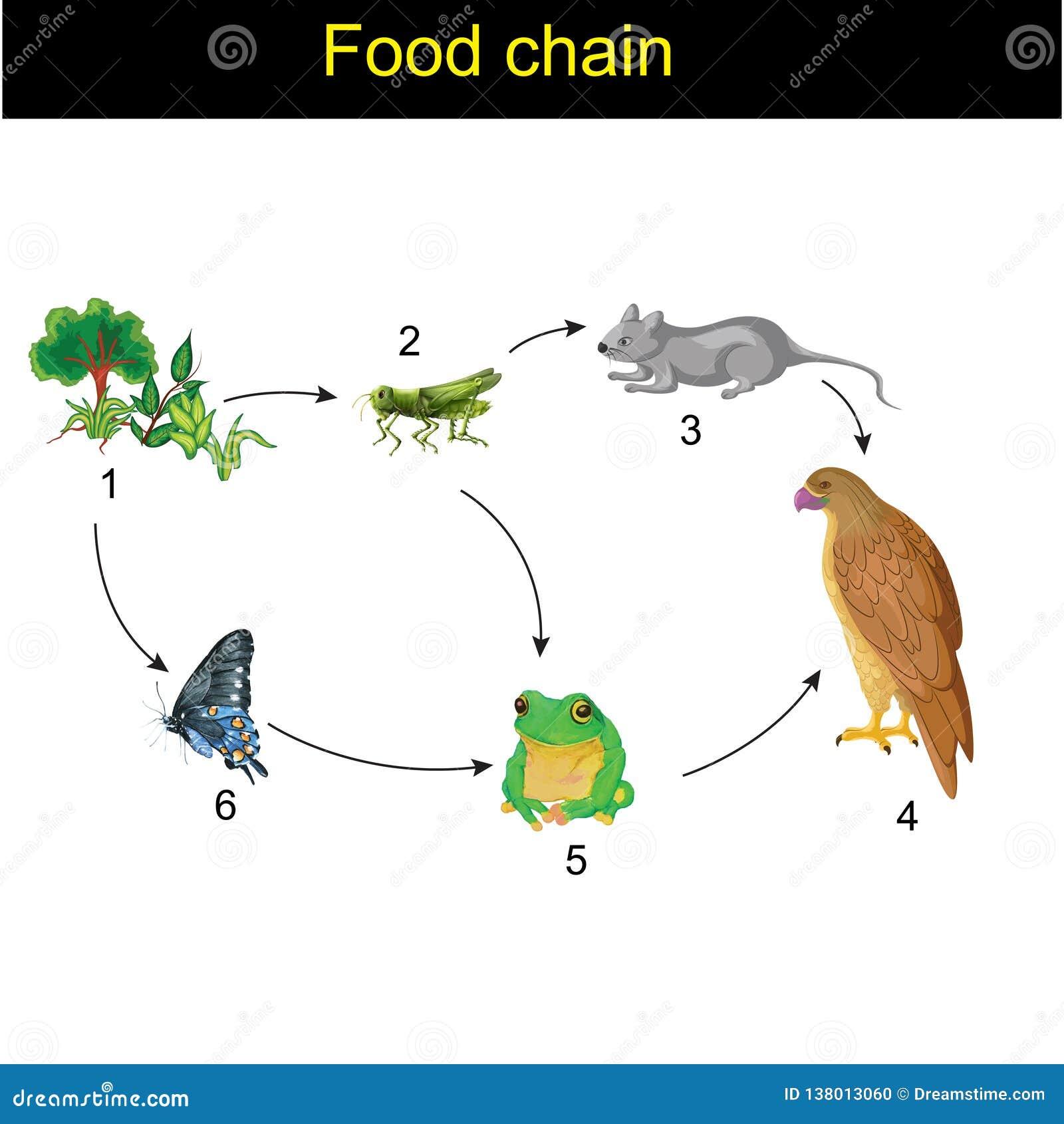 Biology - Food chain version 01