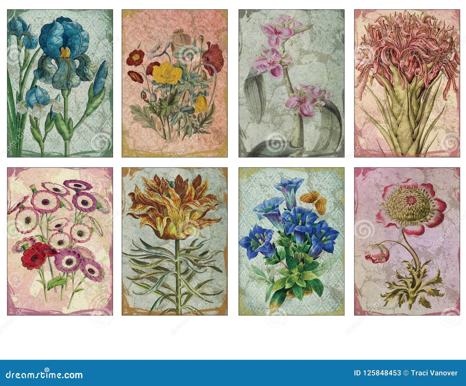 printable tag sheet - vintage floral illustration artist trading