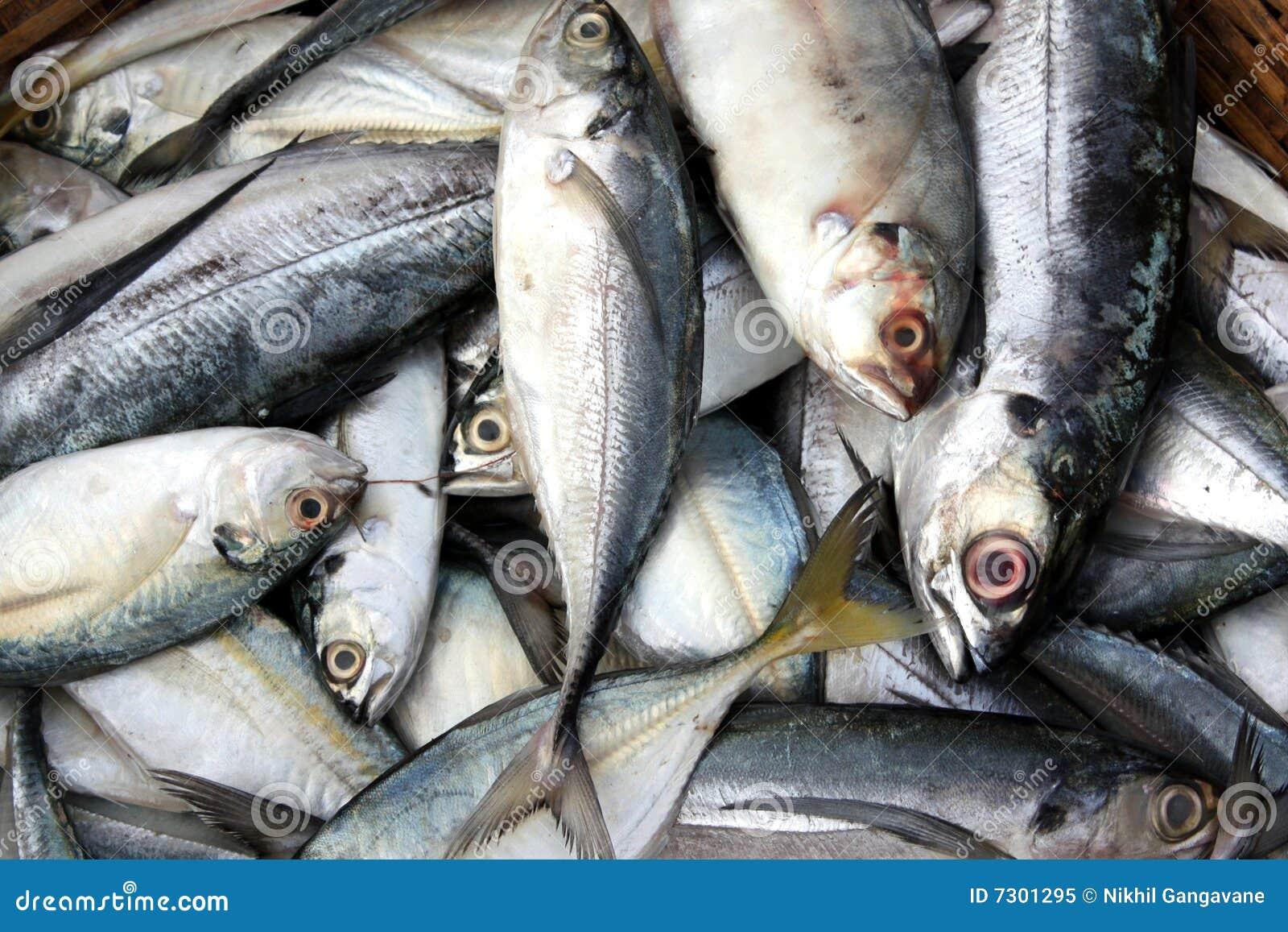 Priorità bassa dei pesci