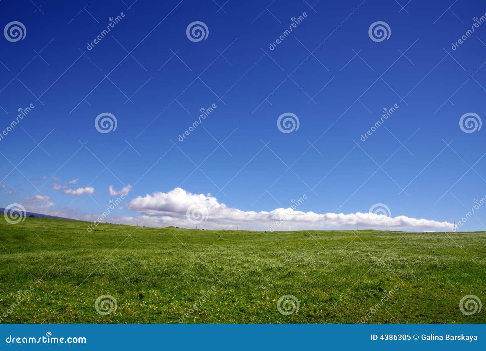 Priorità bassa del cielo e dell erba