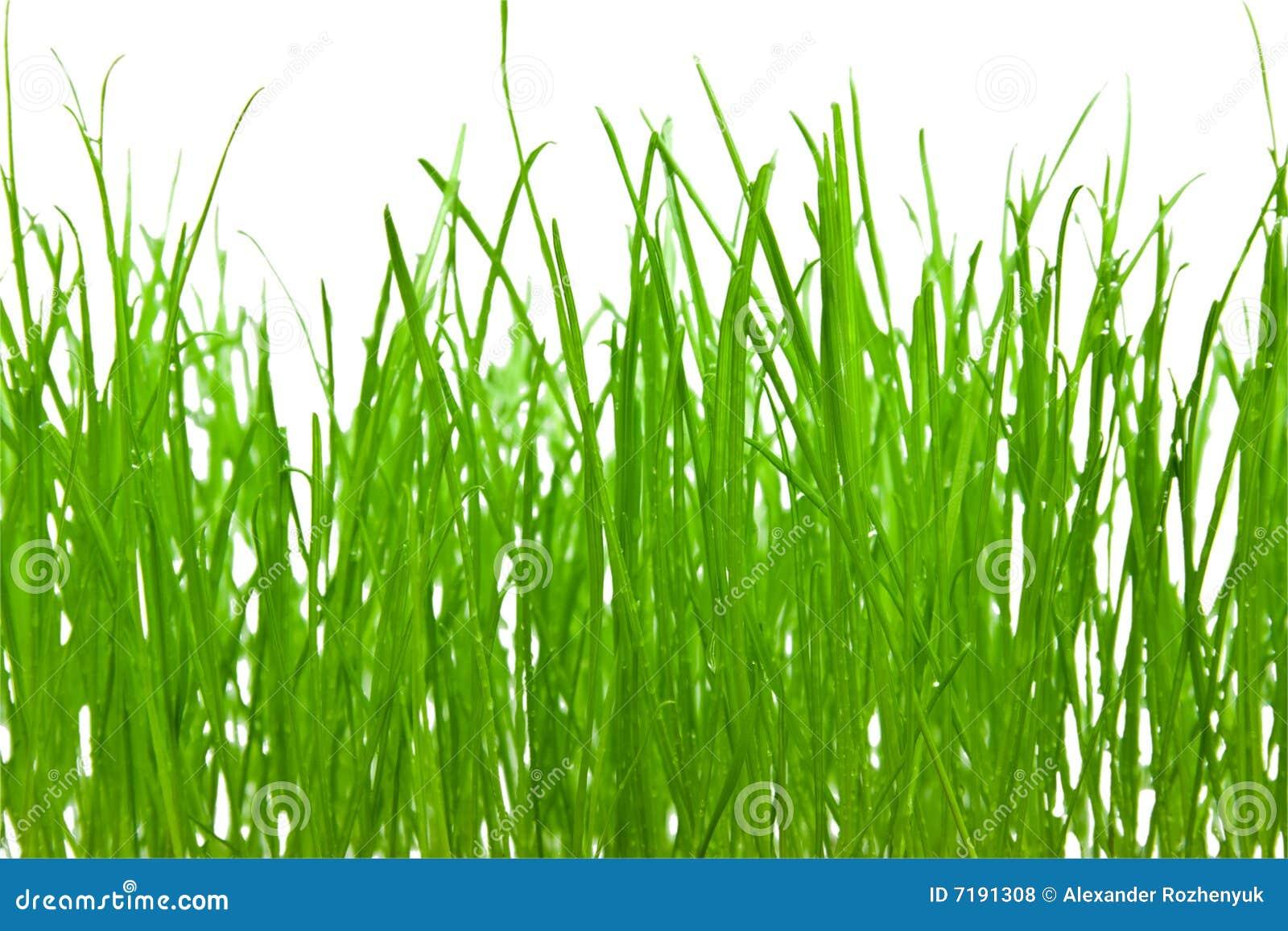 Priorità bassa dell erba verde