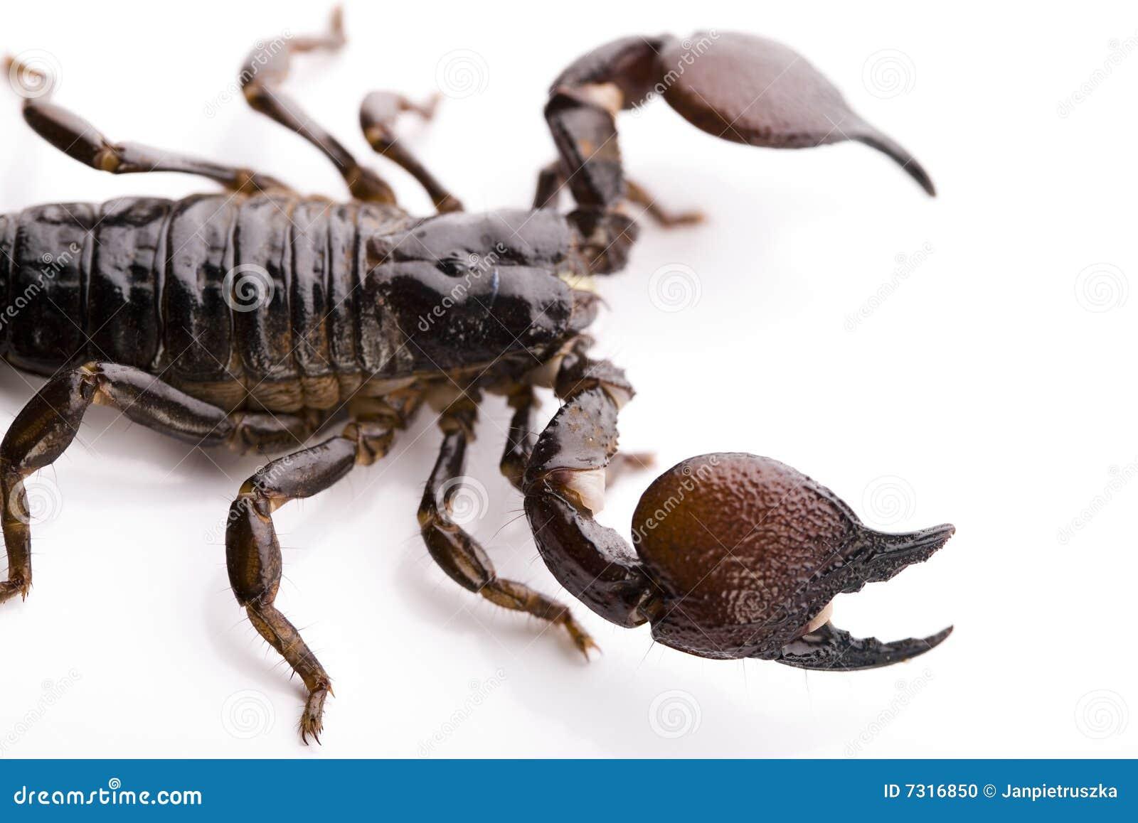 Priorità bassa dello scorpione con il percorso