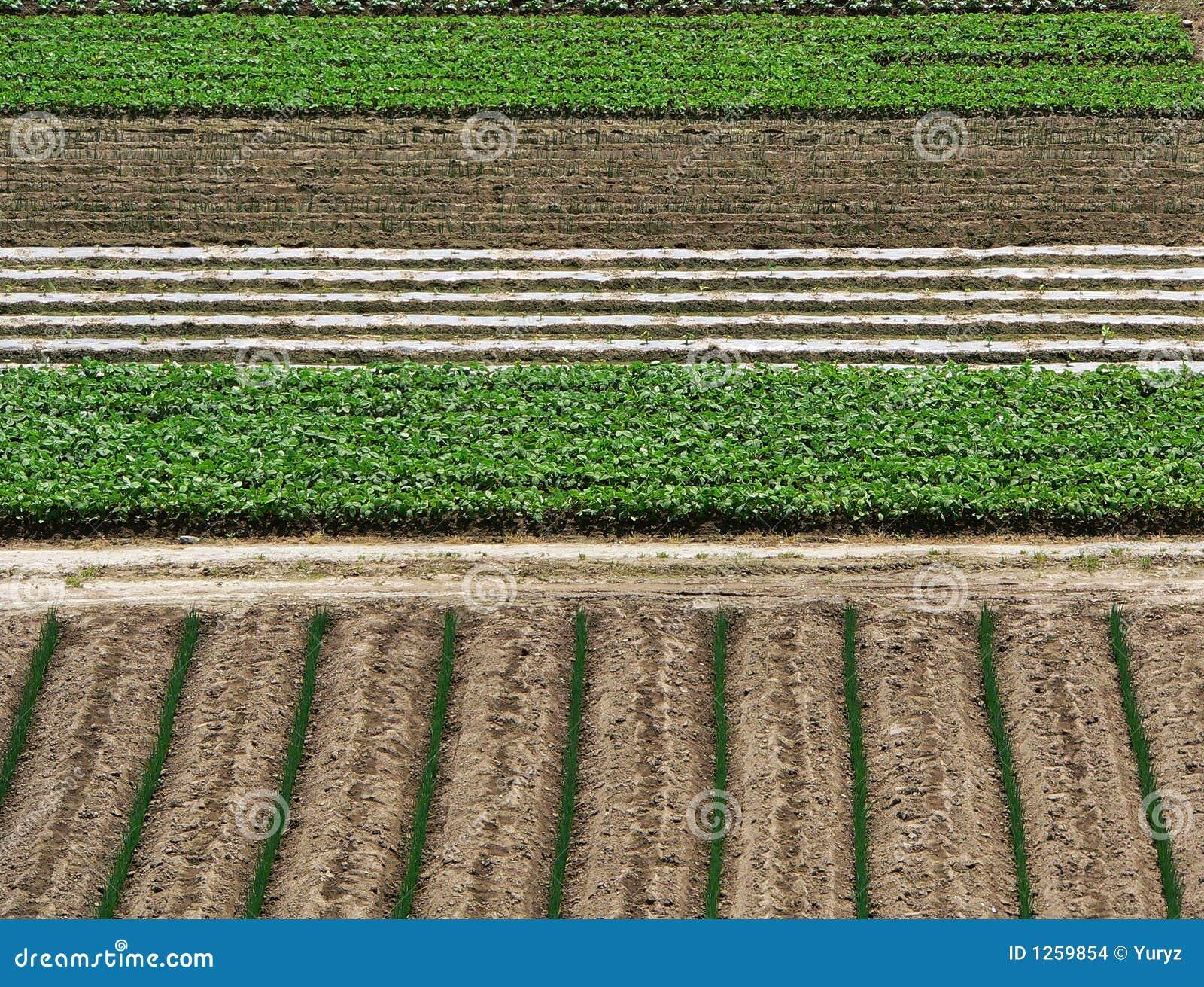 Priorità bassa di agricoltura