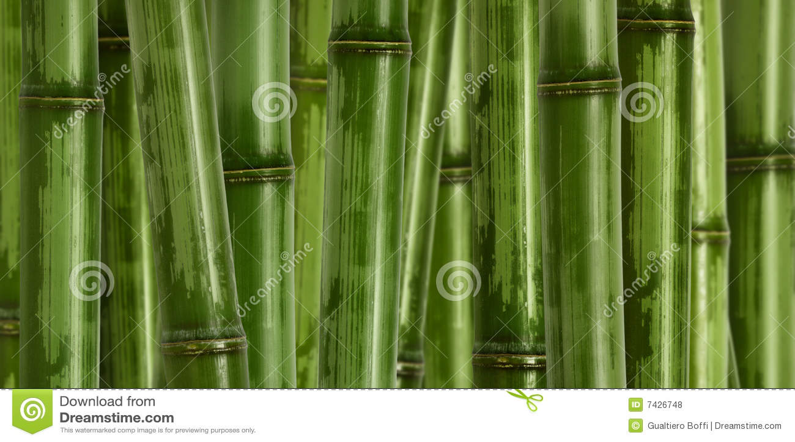Priorità bassa di bambù dura larga