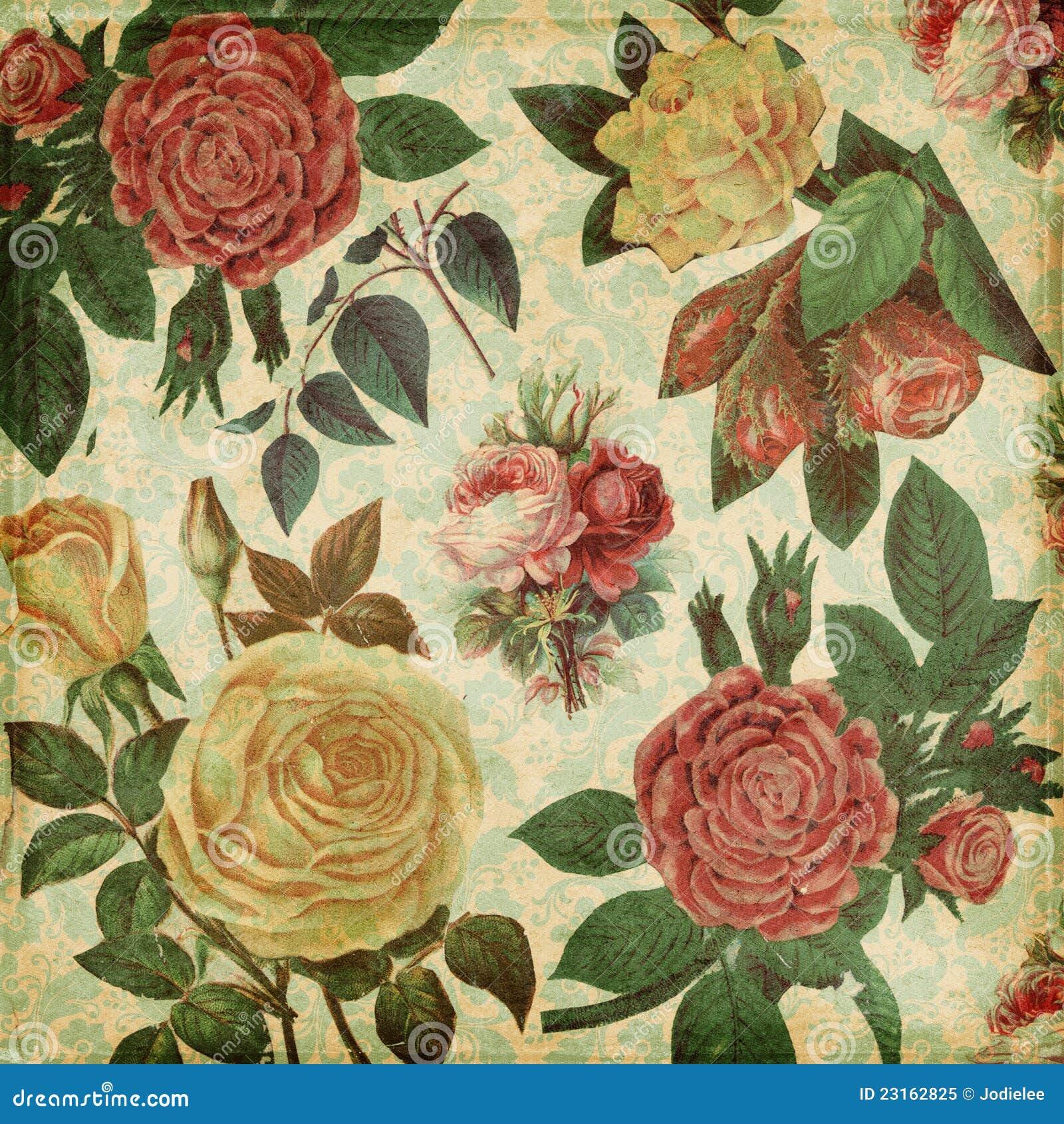 Priorità bassa elegante misera delle rose botaniche dell annata