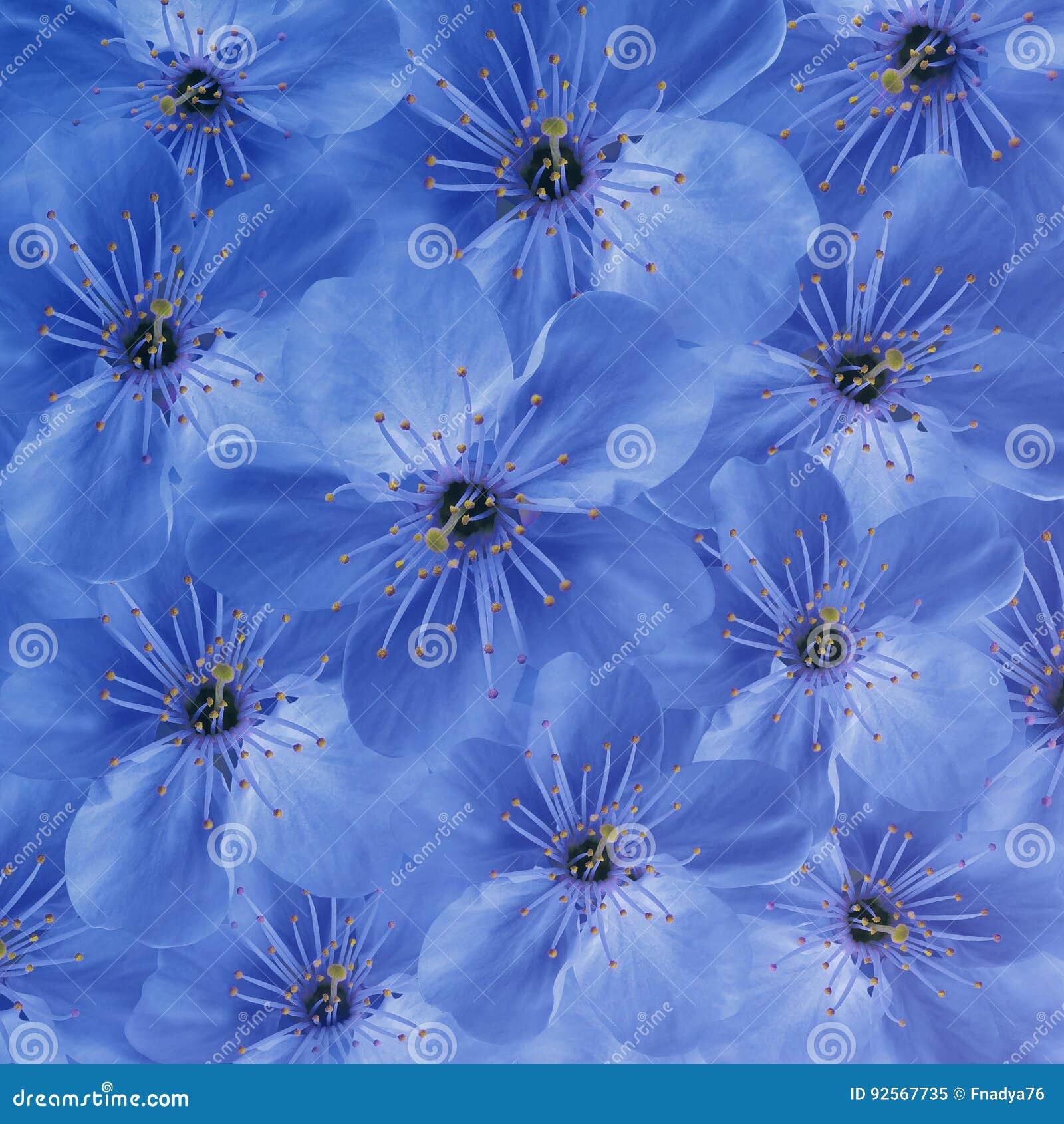 Priorità bassa floreale blu Grande ciliegia bianca dei fiori collage floreale Composizione nel fiore