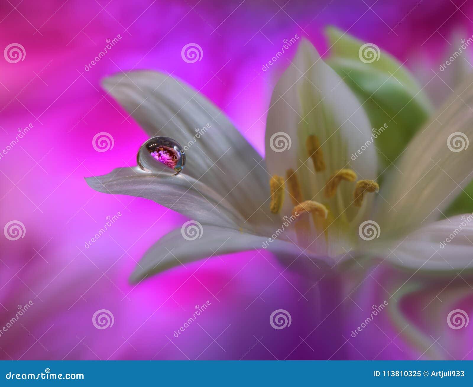 Priorità bassa floreale della sorgente astratta di arte per il disegno Gocciolina, goccia Porpora, fiore Fondo del confine della