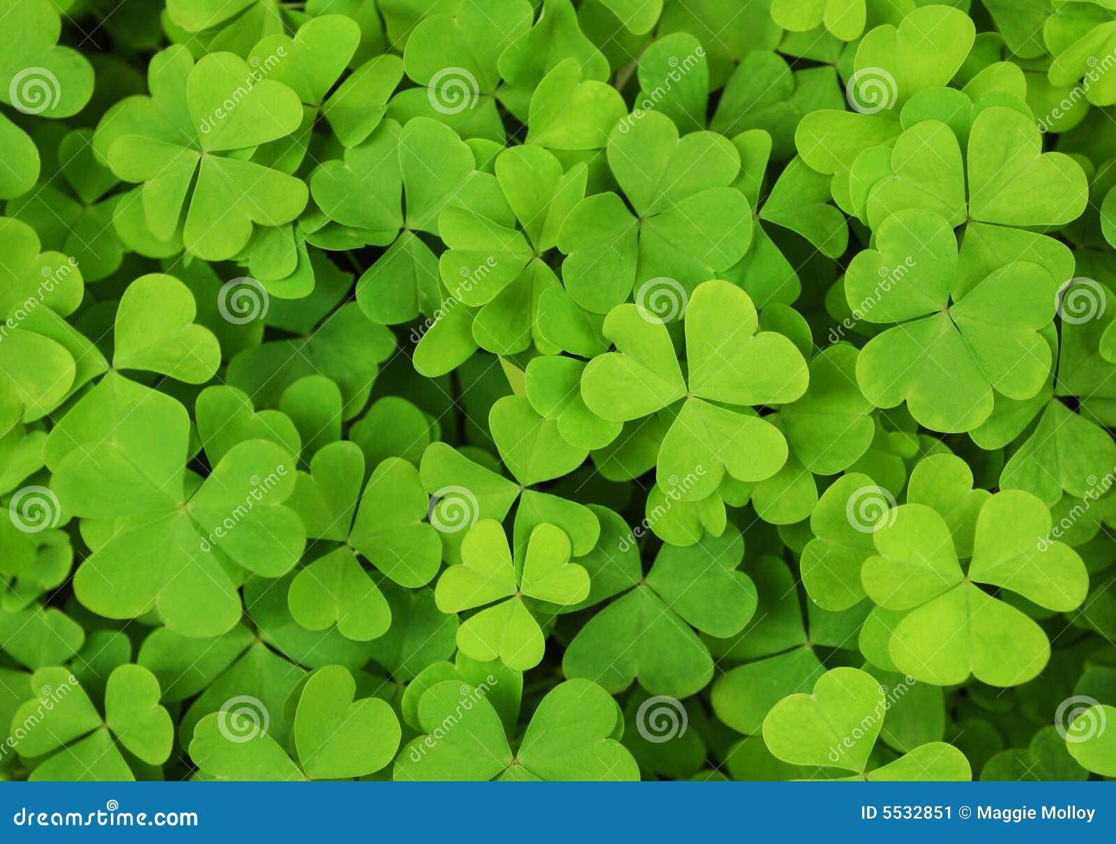 Priorità bassa irlandese del trifoglio dell acetosella